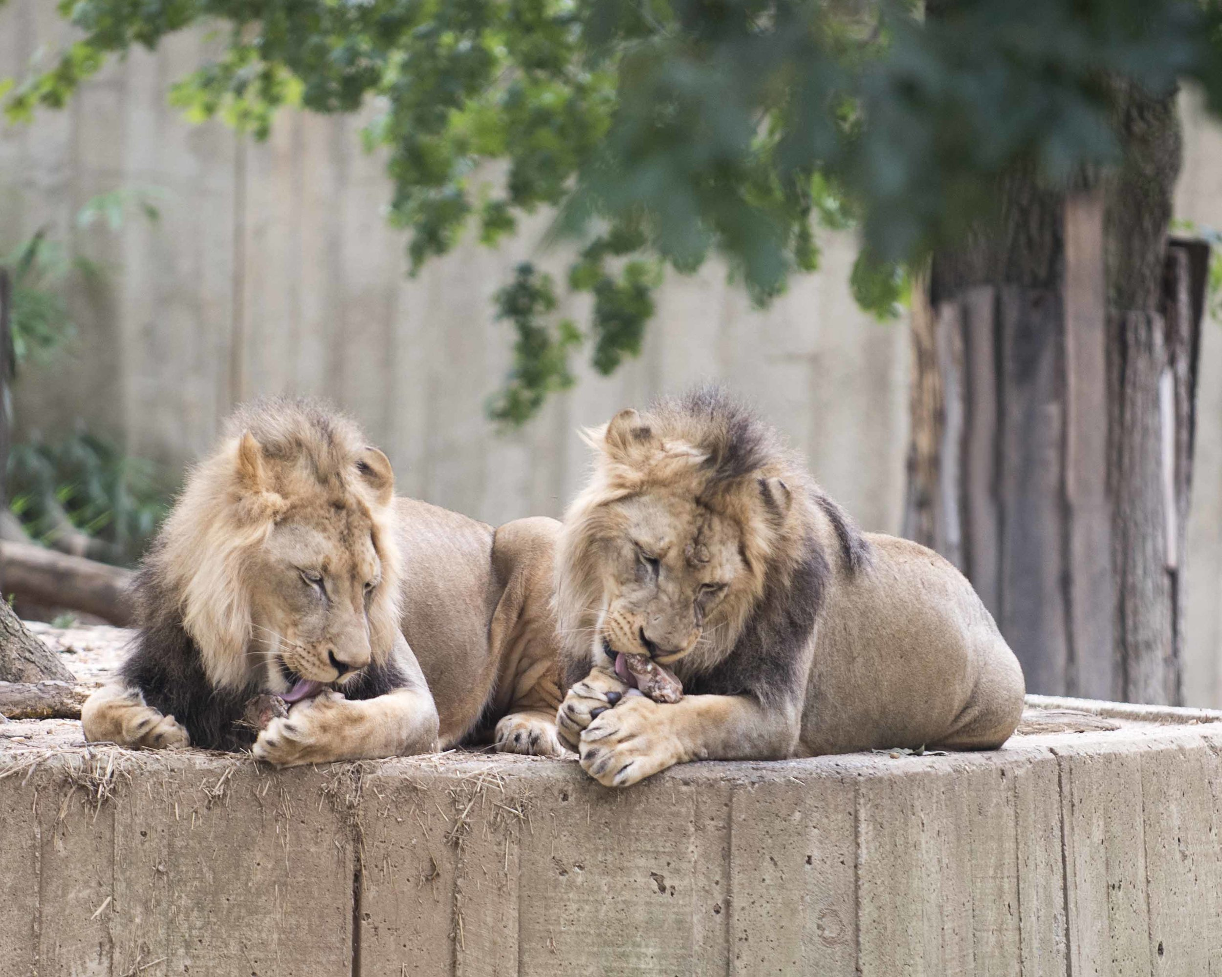 National_Zoo_2016_DeSilvaStudios06.jpg