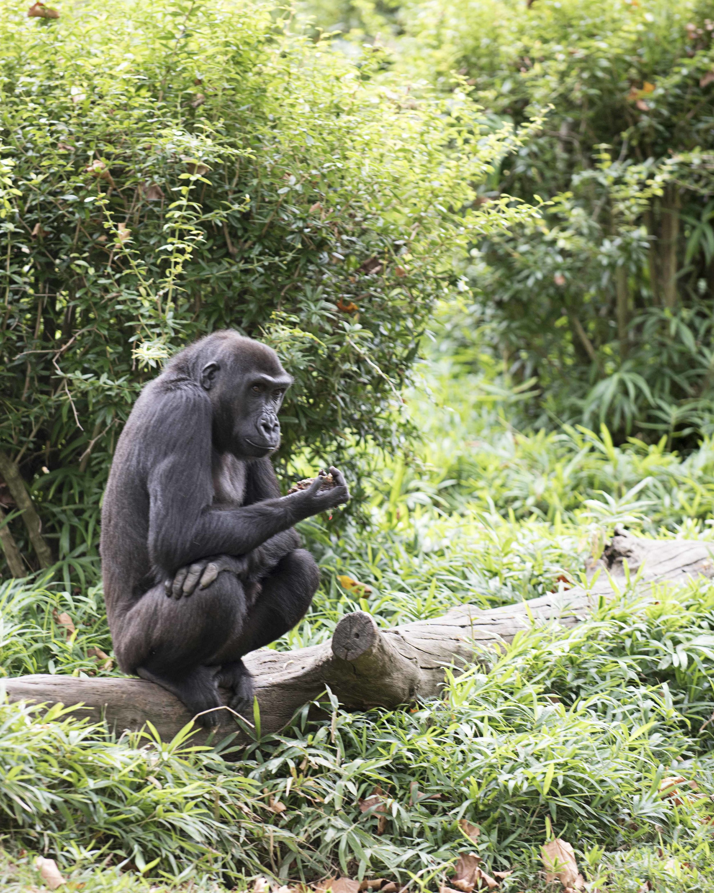 National_Zoo_2016_DeSilvaStudios21.jpg