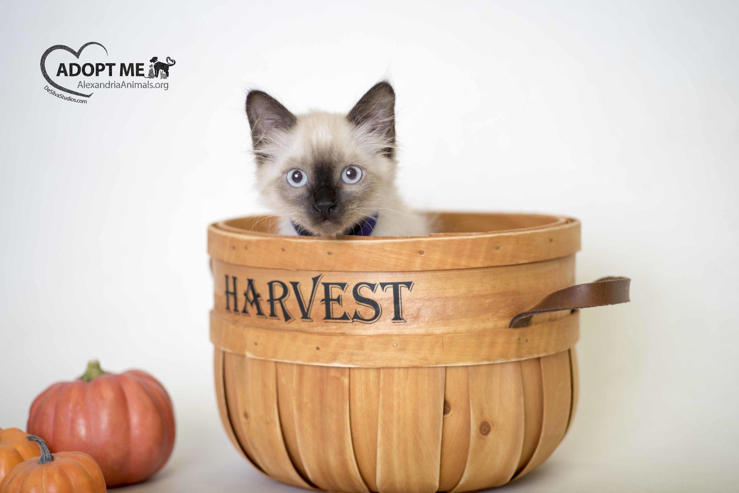 Sesame_Cat_10_1_2016_DS_2.jpg