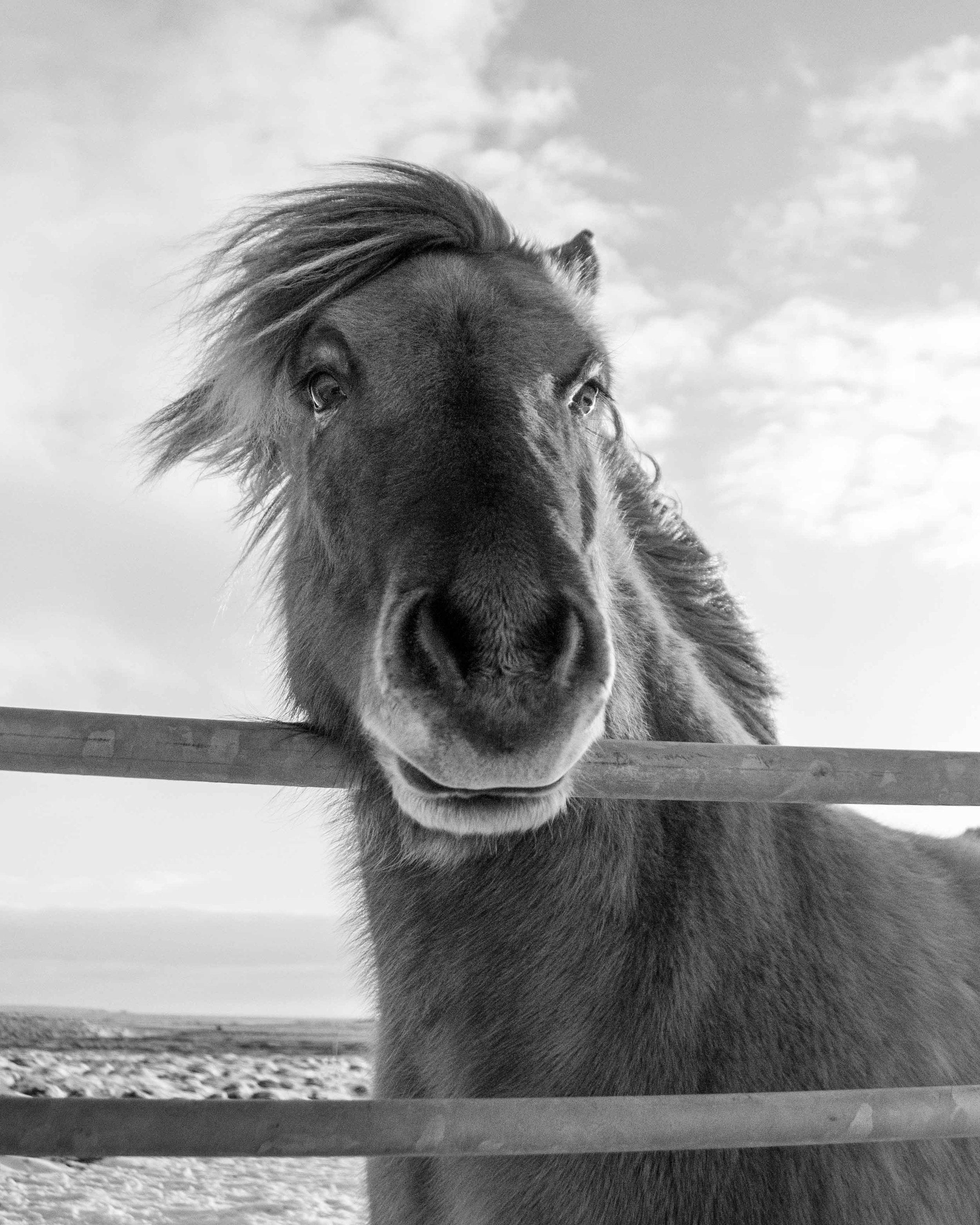 Iceland_Horses_11232017_04.jpg