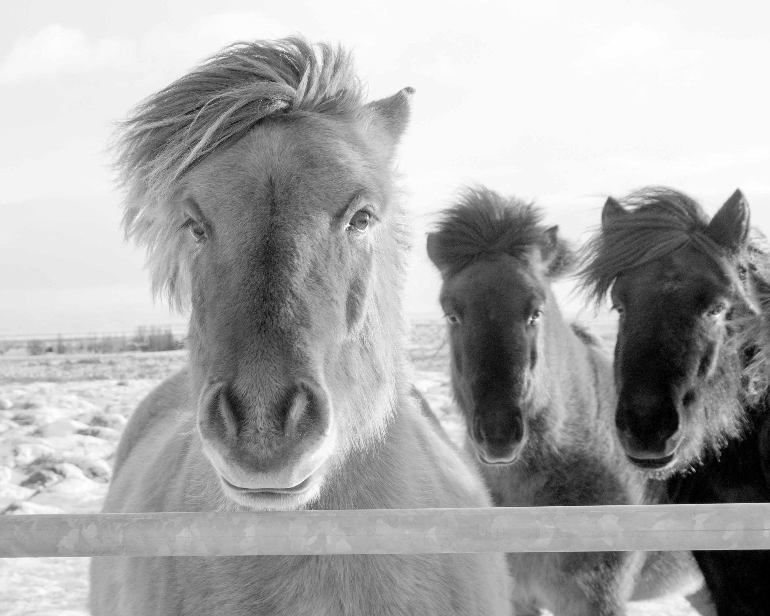 Iceland_Horses_11232017_05.jpg