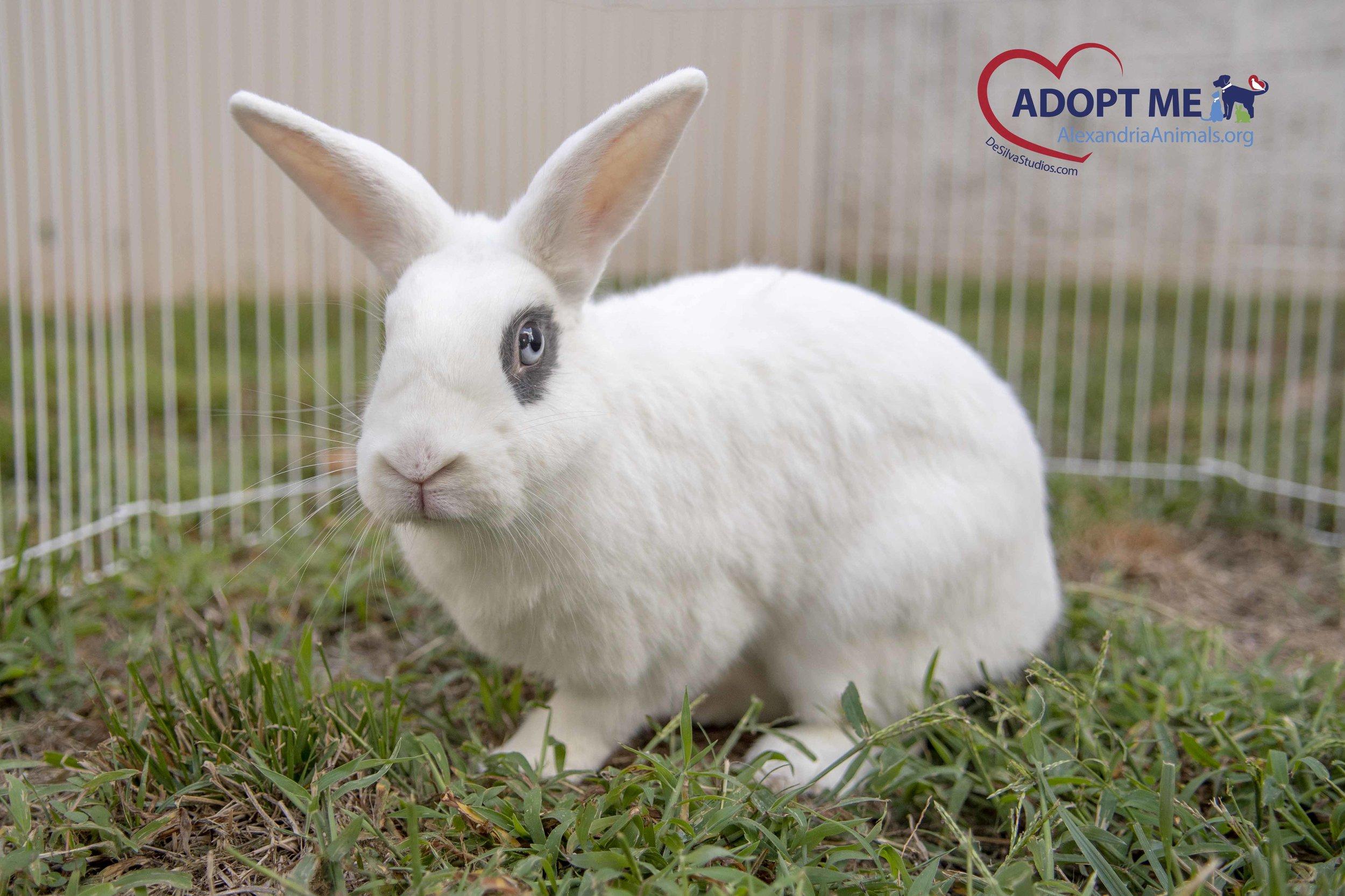 Phoobe_Rabbit_AWLA_09182019-01.jpg