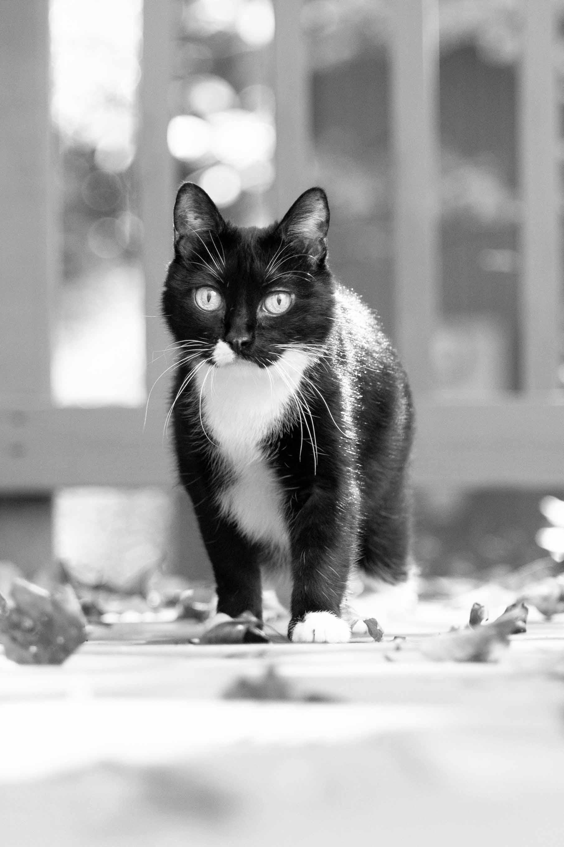 Arlington_Cat_Photographer_10282017_05.jpg