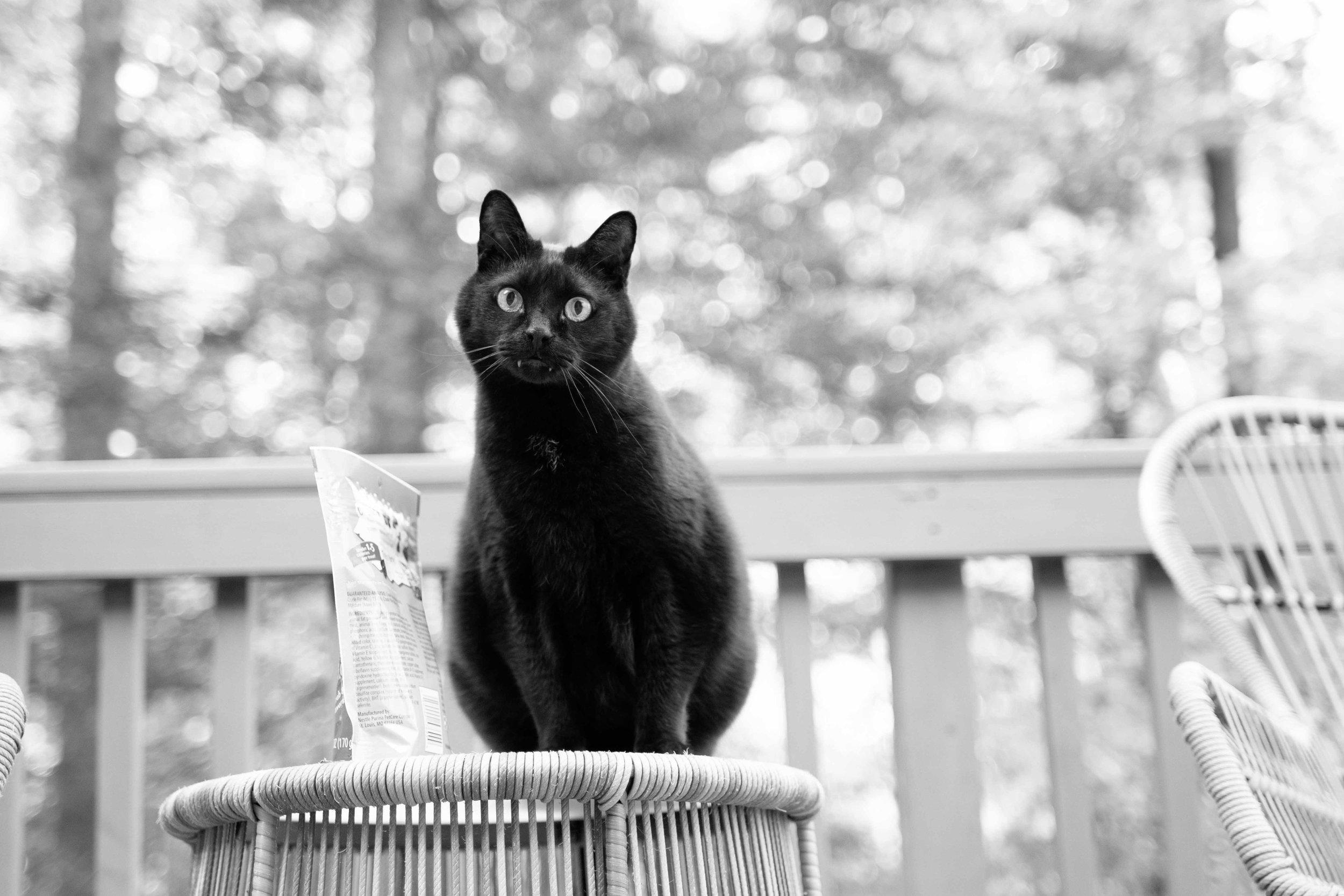 Arlington_Cat_Photographer_10282017_04.jpg