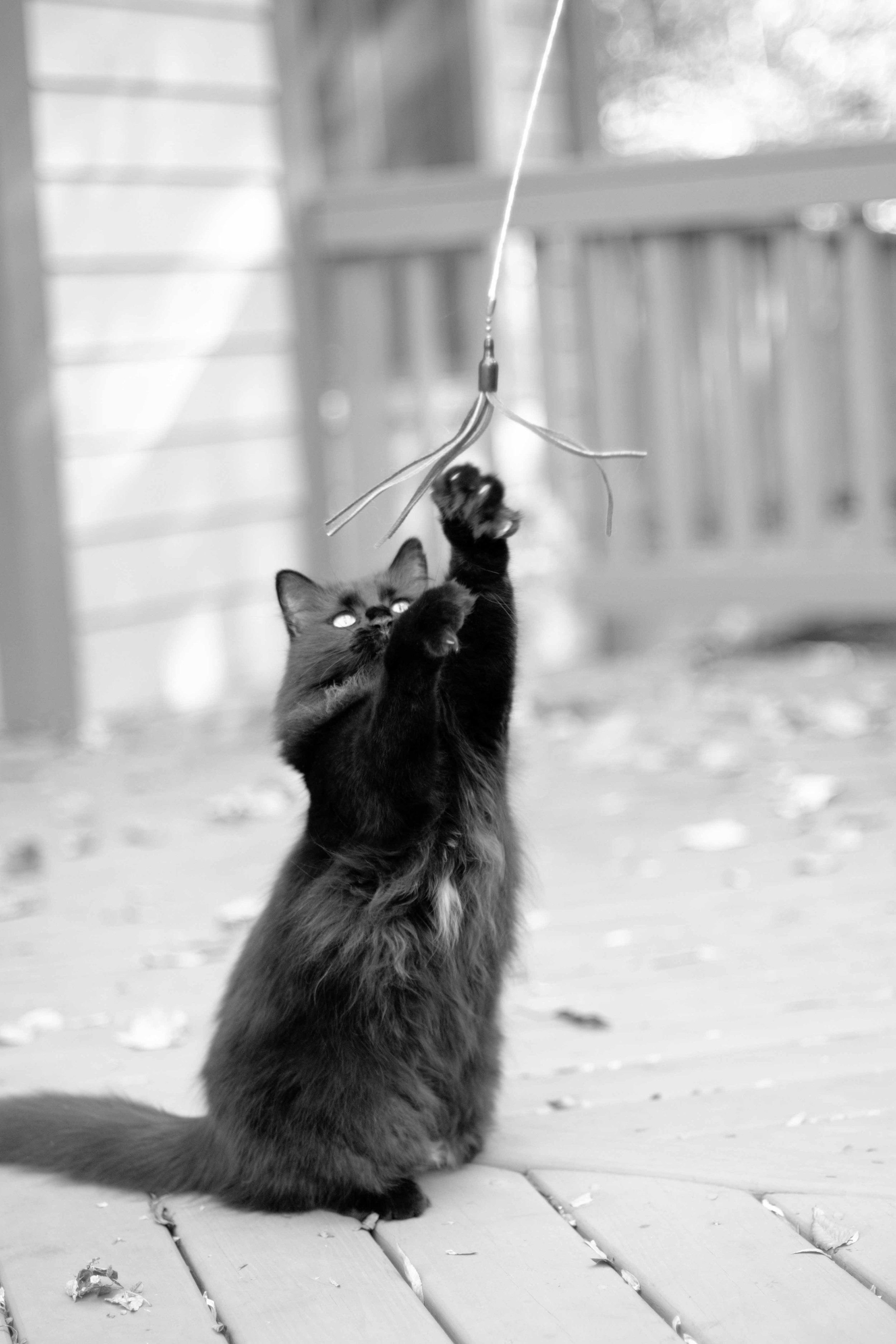 Arlington_Cat_Photographer_10282017_06.jpg