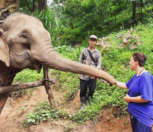 Keri elephant thailand.jpg