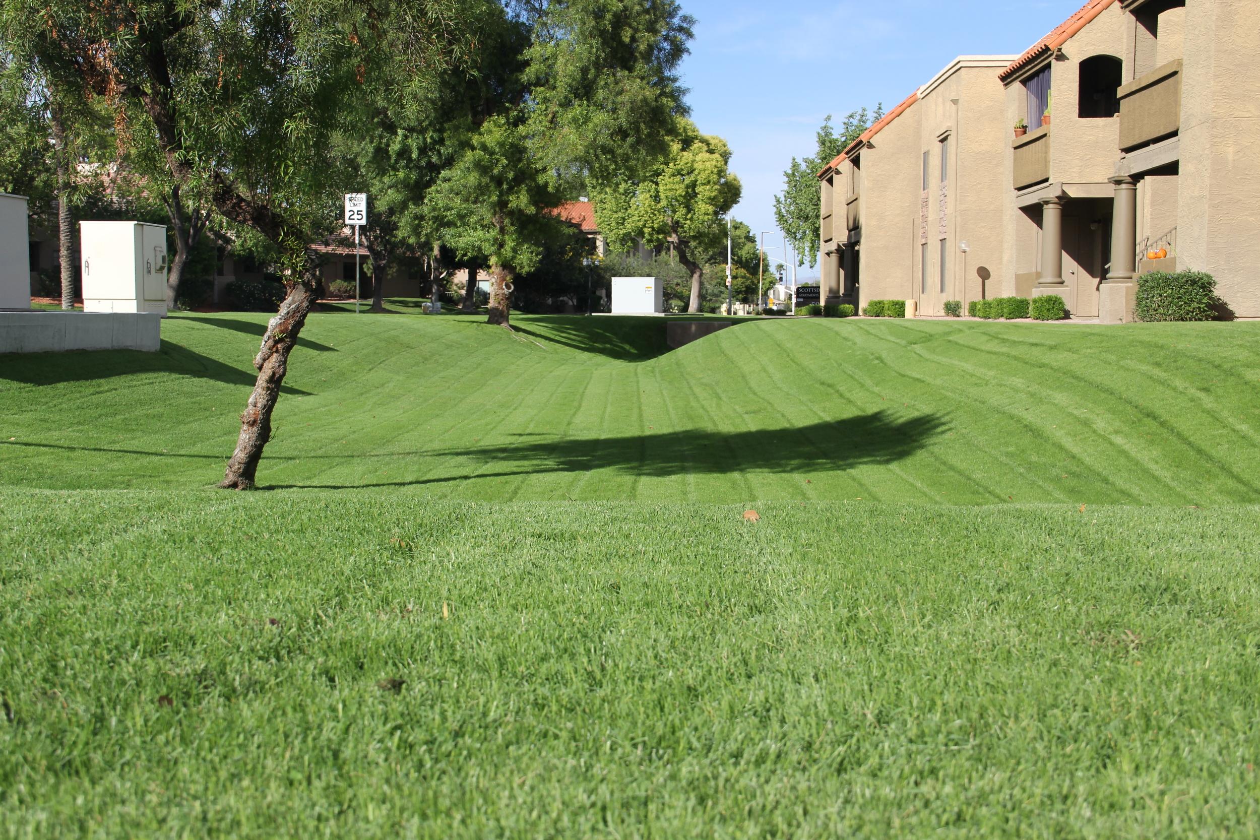 cornerstone-landscape-arizona.JPG