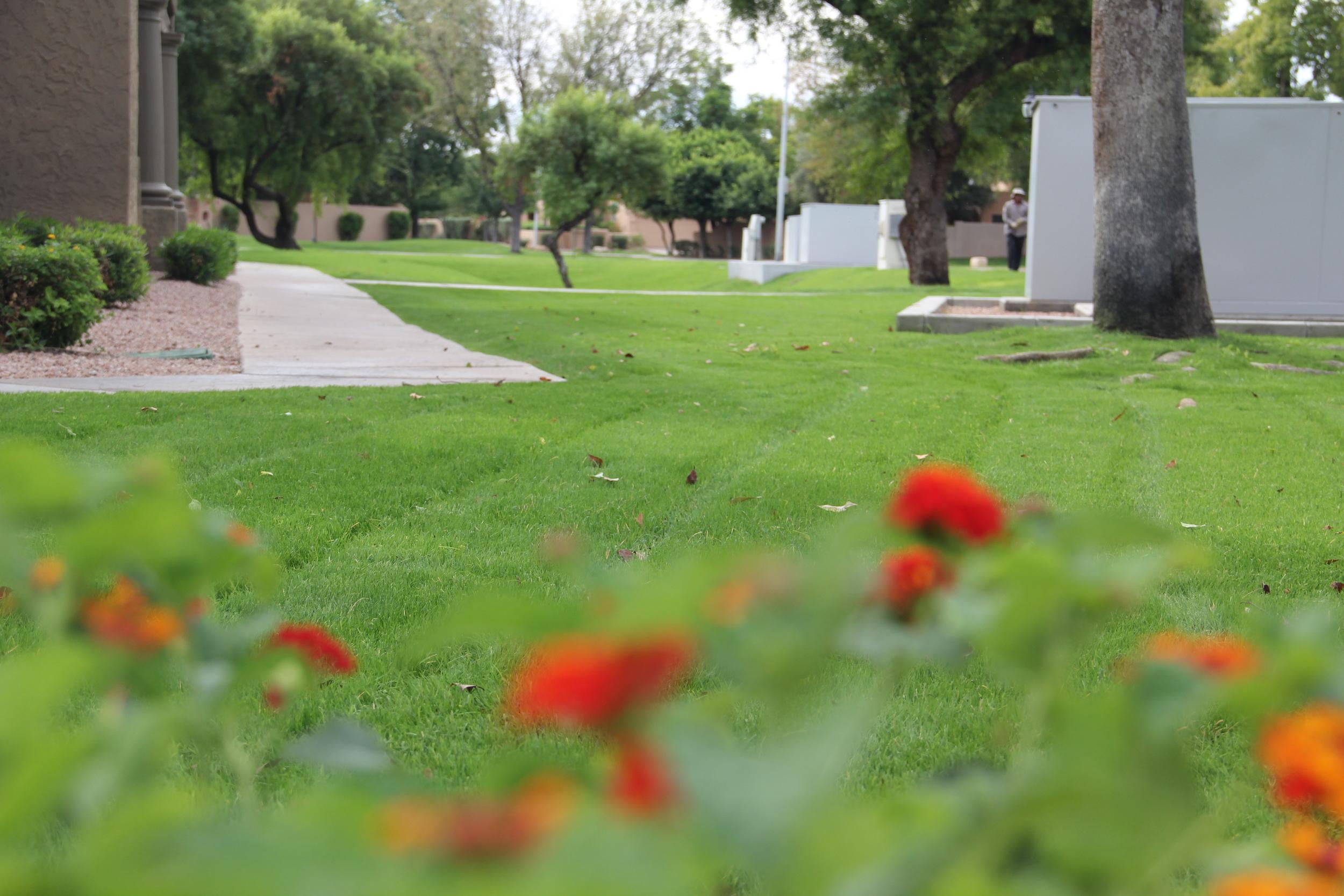 cornerstone-landscaping-arizona.JPG