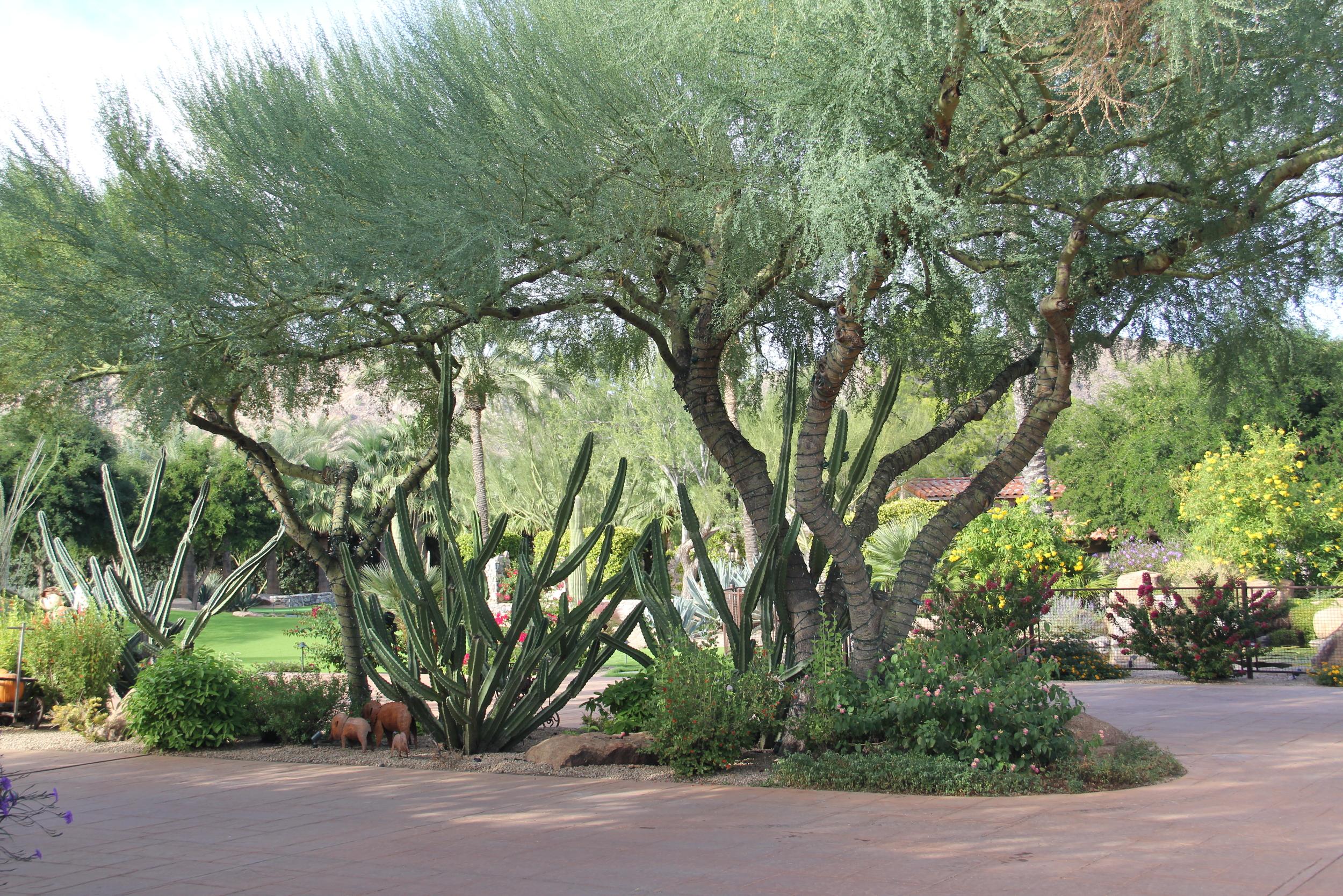 cornerstone-landscaping-desert-arizona.JPG