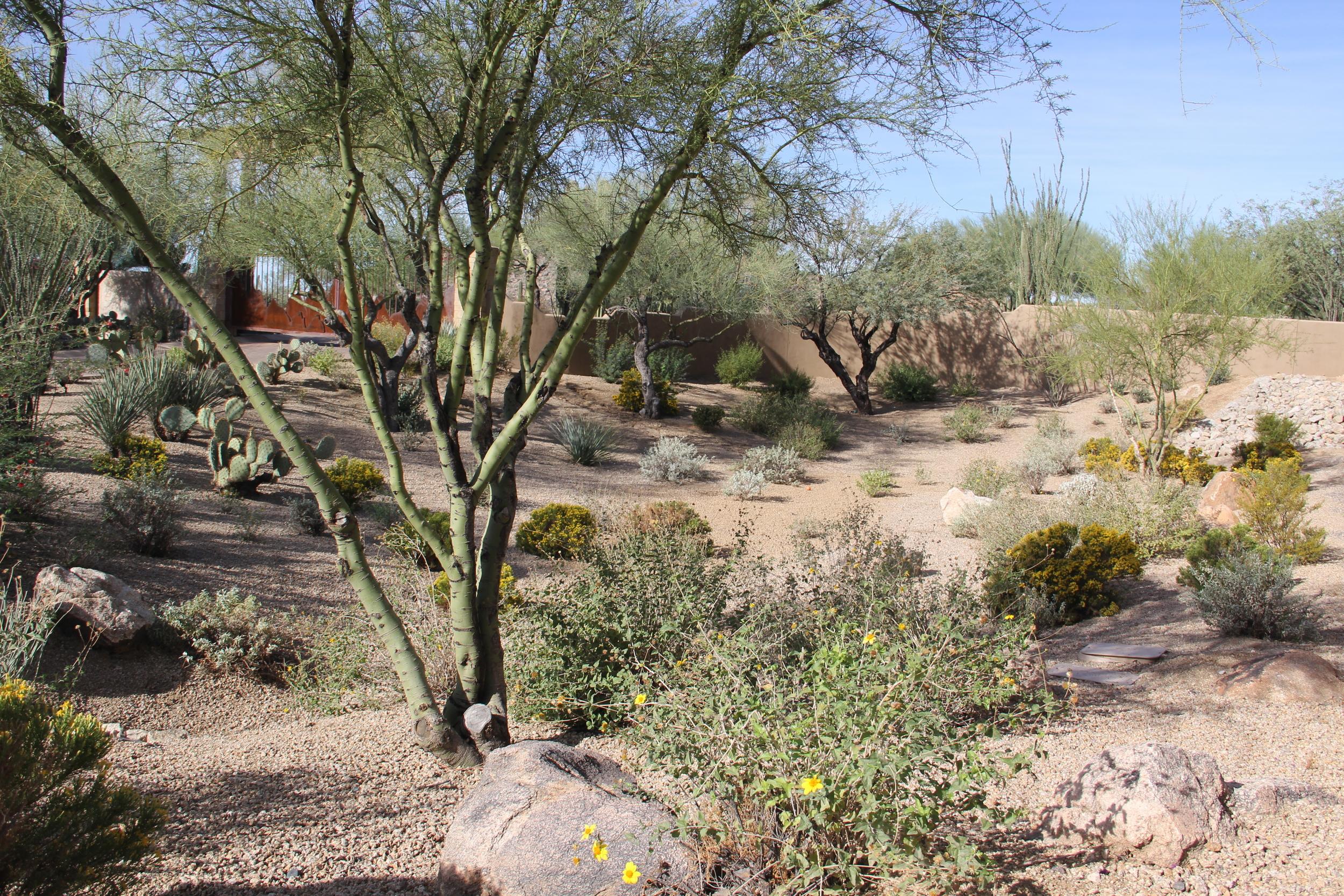 Cornerstone-Landscaping-Desert.JPG