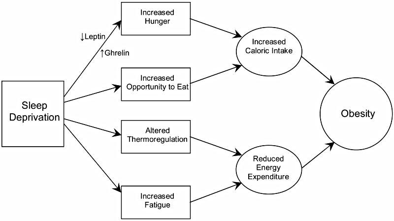 How Sleep Deprivation Influences Weight Gain    Obesity (Silver Spring). 2008 Mar;16(3):643-53. doi: 10.1038/oby.2007.118. Epub 2008 Jan 17.