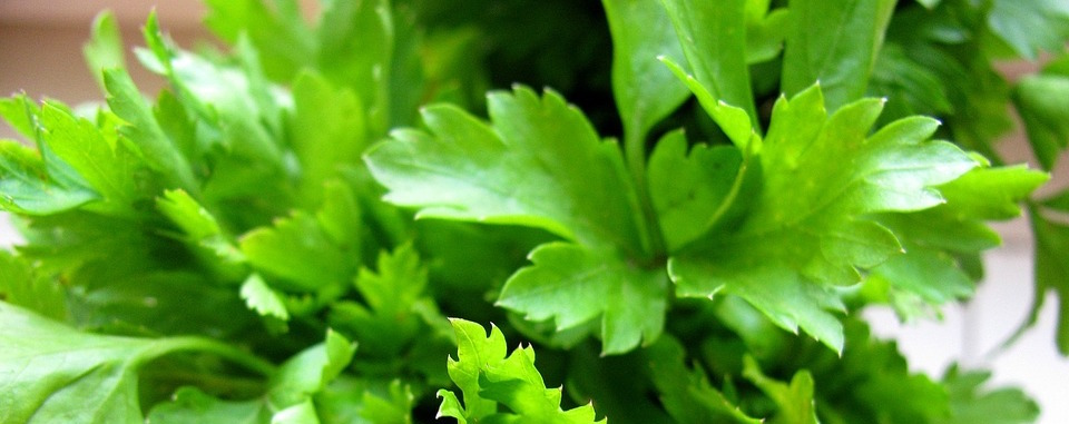 Freshly chopped parsley leaves