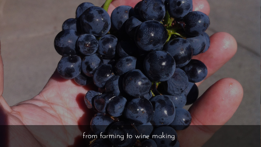 chaname-wines-grapes-to-wine_Gallery 4.jpg