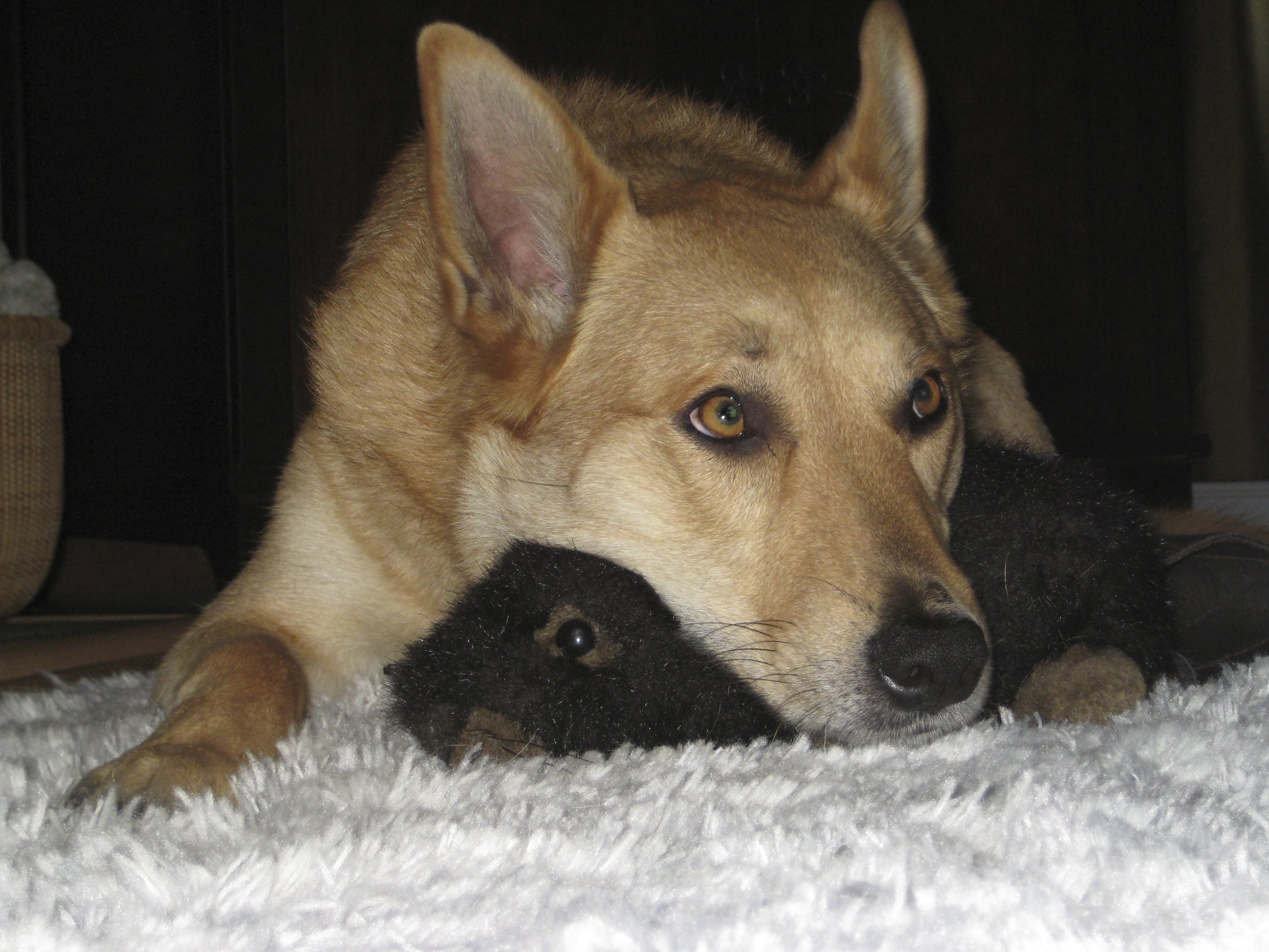Wylie with his buddy Beaver Bud Gnawood.