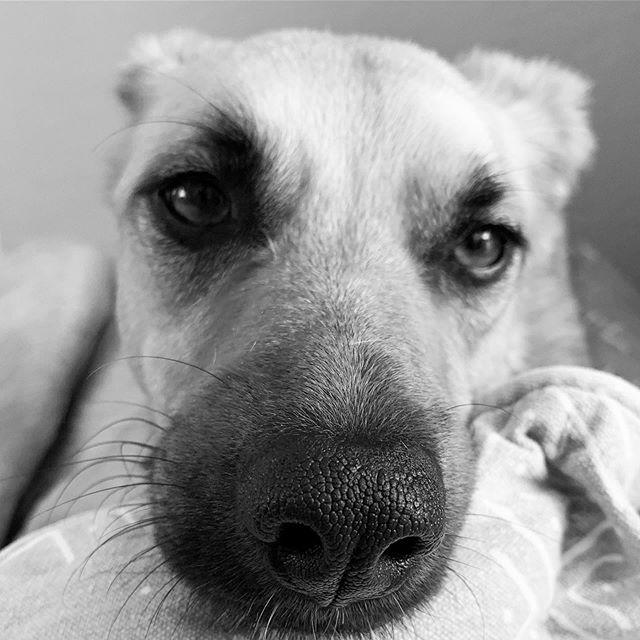 Portrait of a Pup