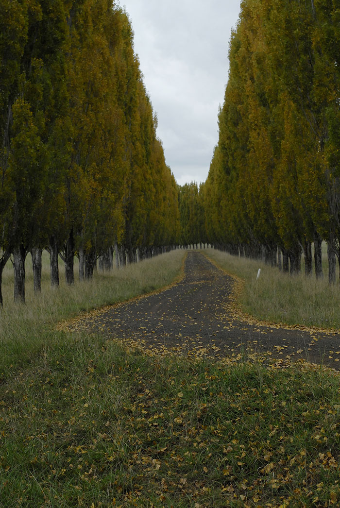 Typical tourist road New England tablelands near Glen Innes northern New South Wales.