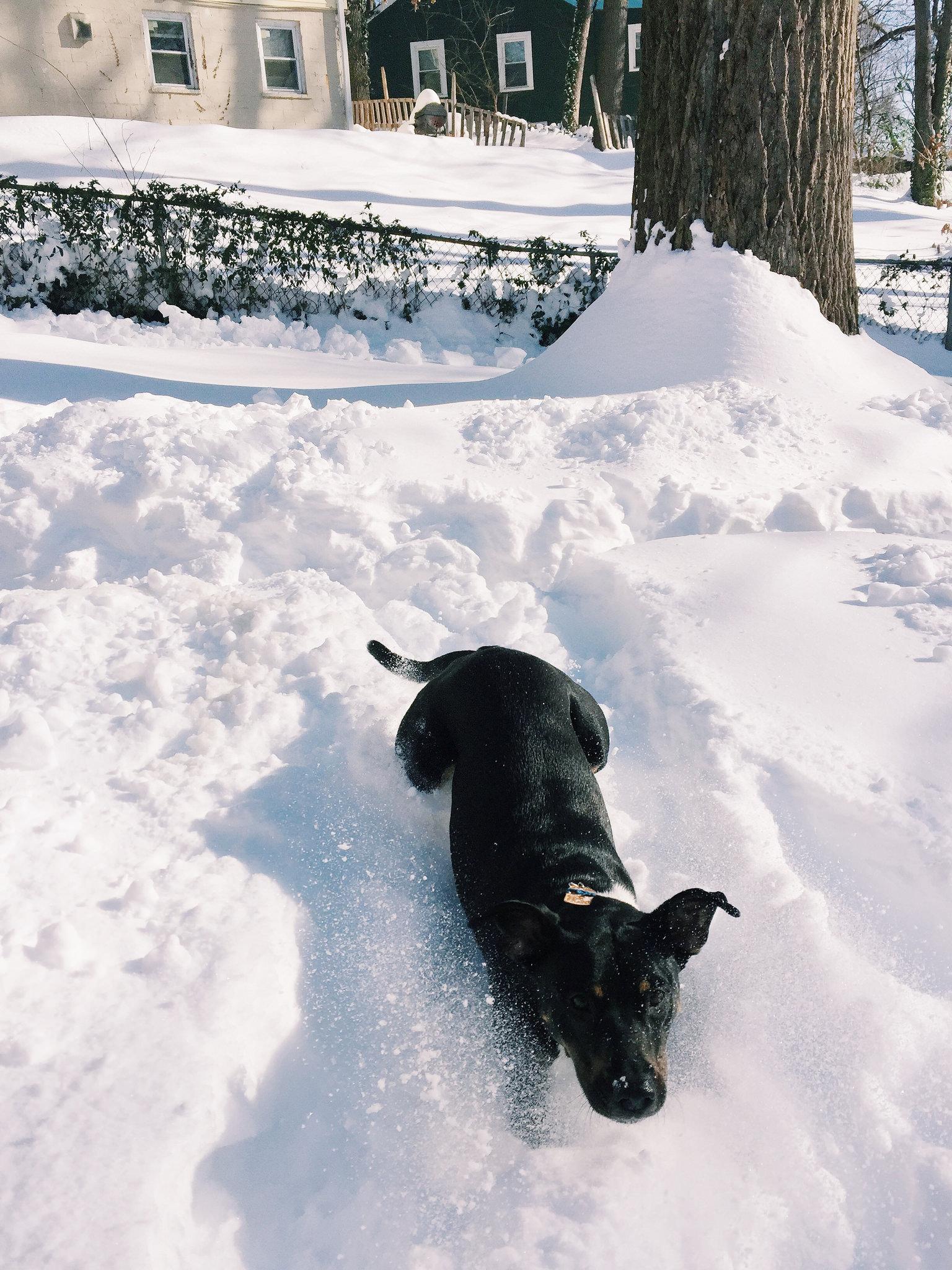 Snowzilla Lessons