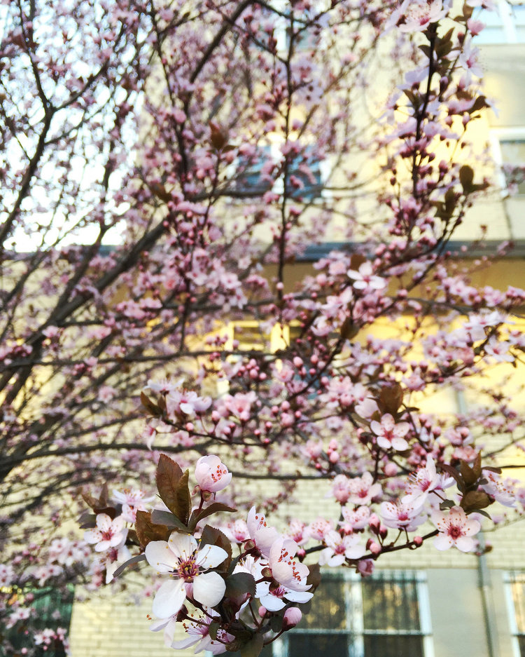 A Field Guide to Early Spring Blooms