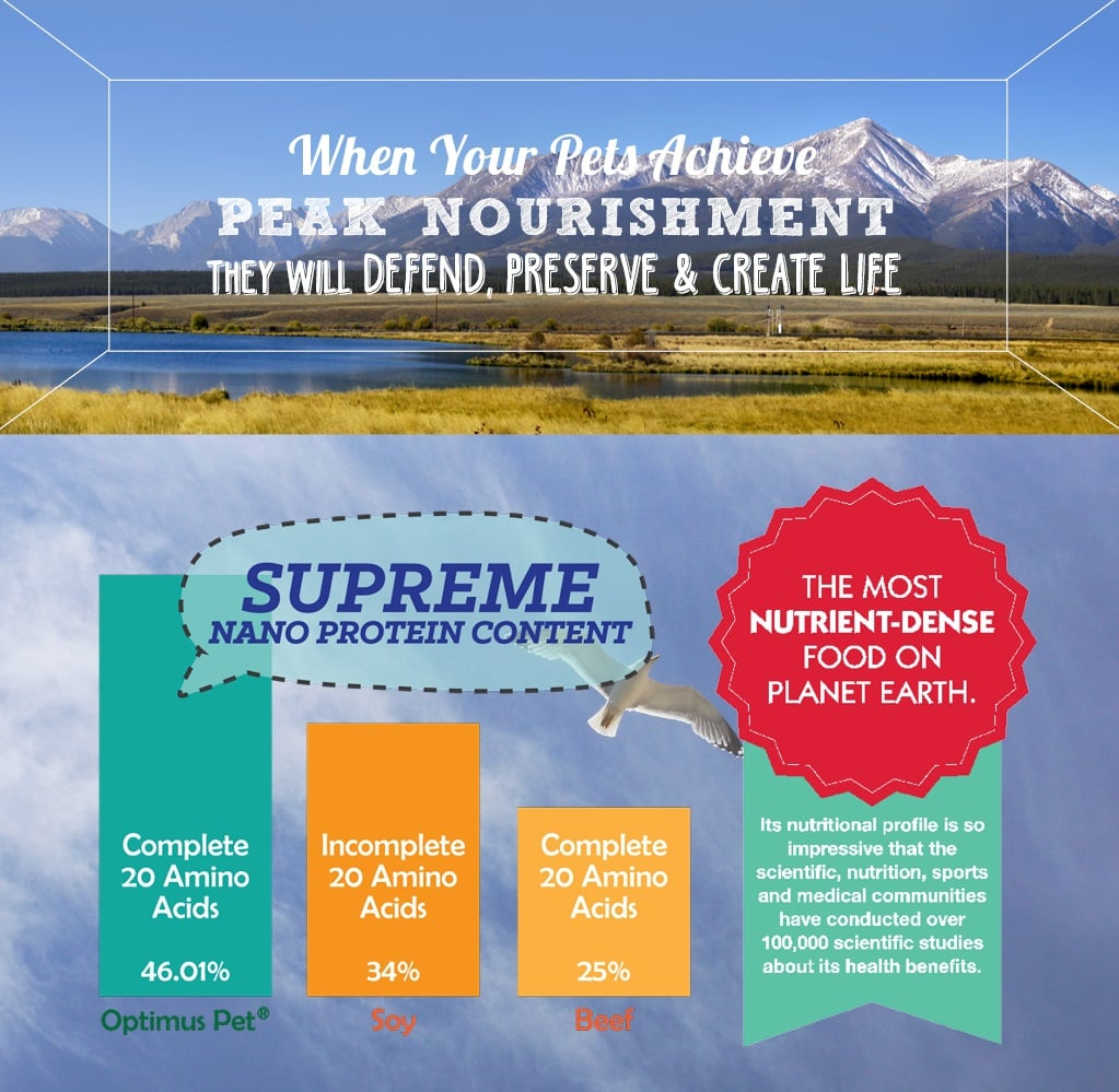 Supreme Nano protein content:Most nutrient-dense food on planet earth