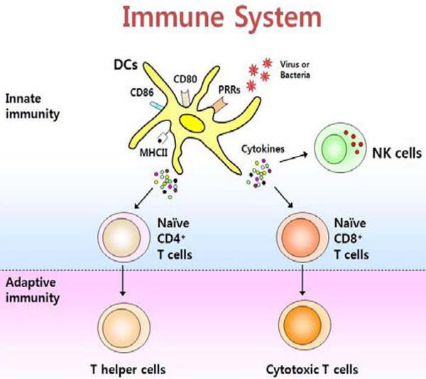 ....Optimus Pet ®- Induced Activation & Maturation of Monocyte-Derived Dendritic Cells through NF- κB  and PI3K/MAPK Pathways ..Optimus Pet® - Tăng cường khả năng hoạt hóa và trưởng thành của các tế bào tua đơn nhân thông qua NF-κB và PI3K/MAPK ..Optimus Pet®通过NF-κB和PI3K / MAPK途径促使单核细胞来源的树突状细胞的激活和成熟....