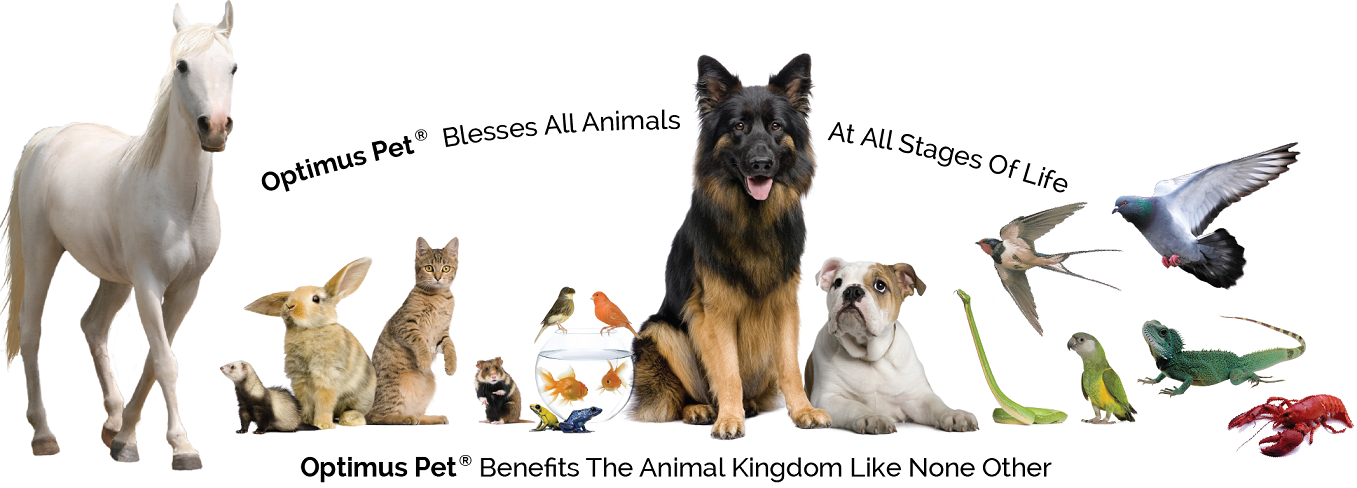 Click Here to find out how Optimus Pet® Works