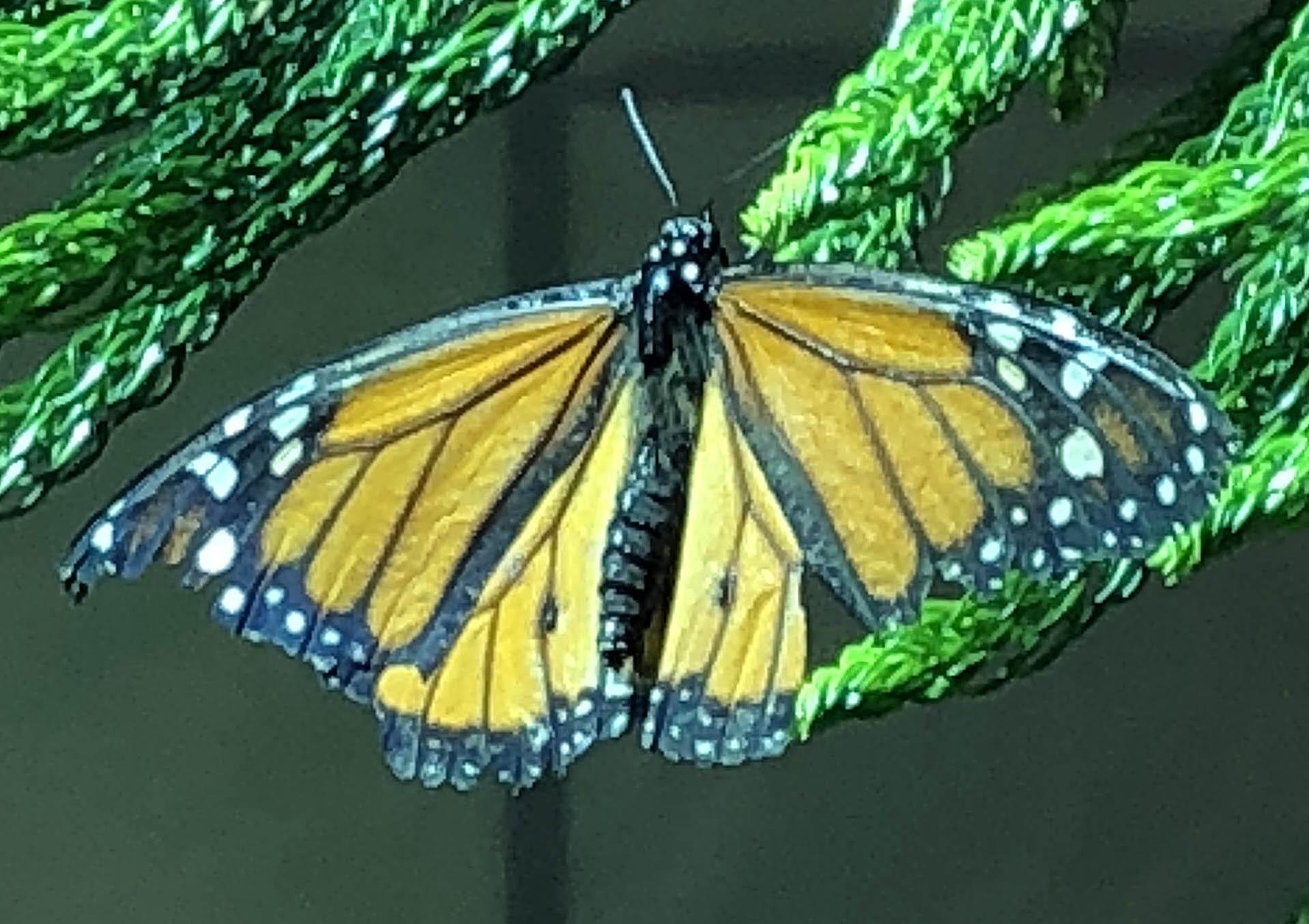 butterfly 1 (1).jpg