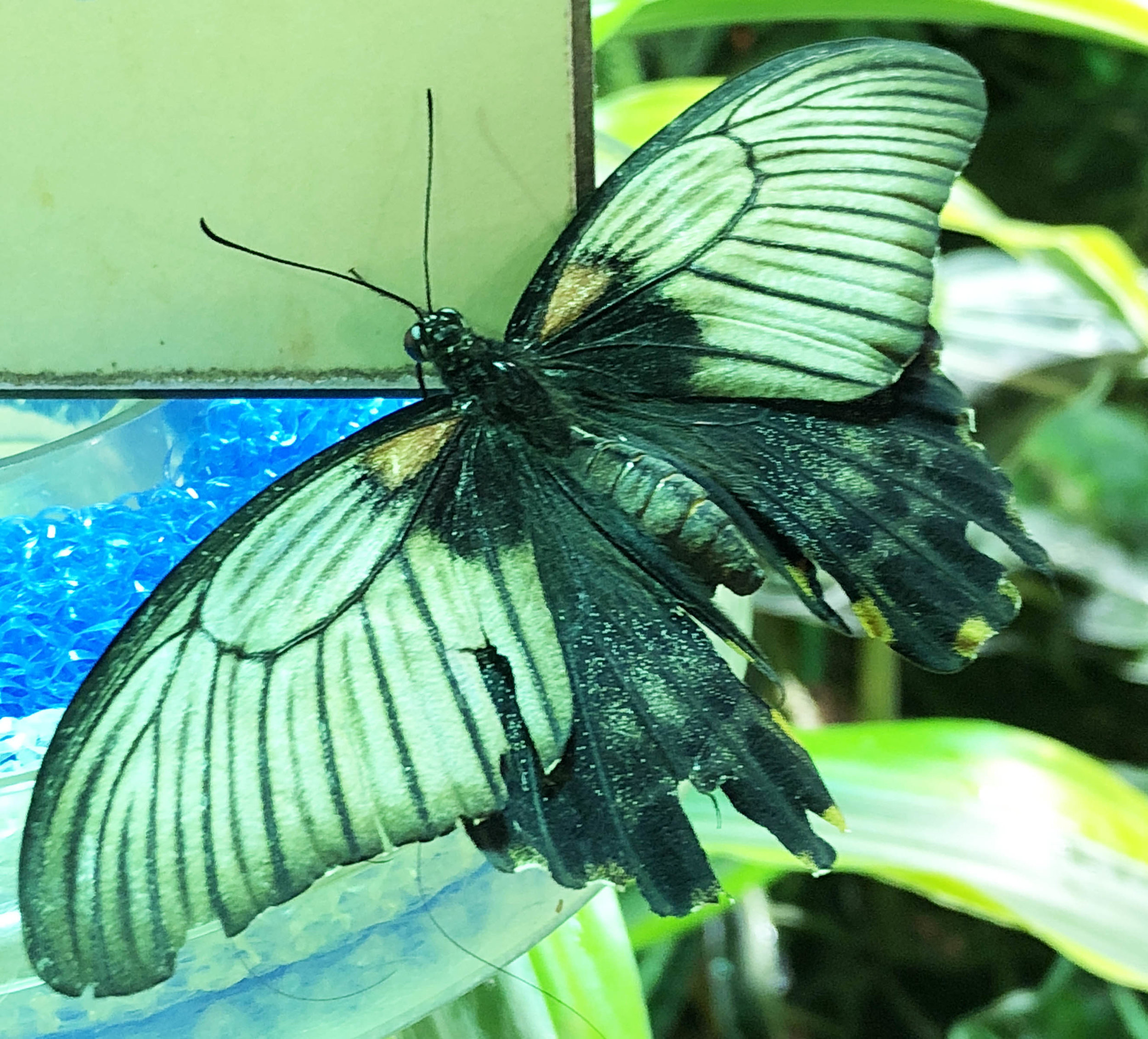 butterfly 2.jpg