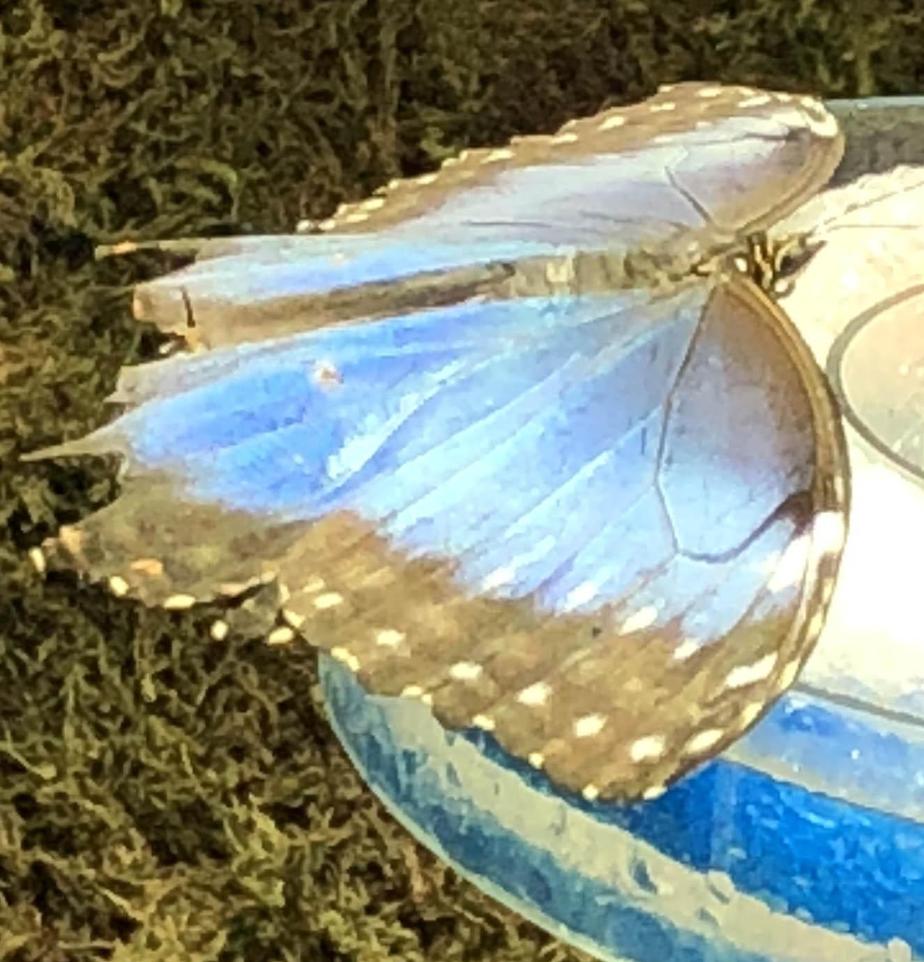butterfly 6 71.jpg