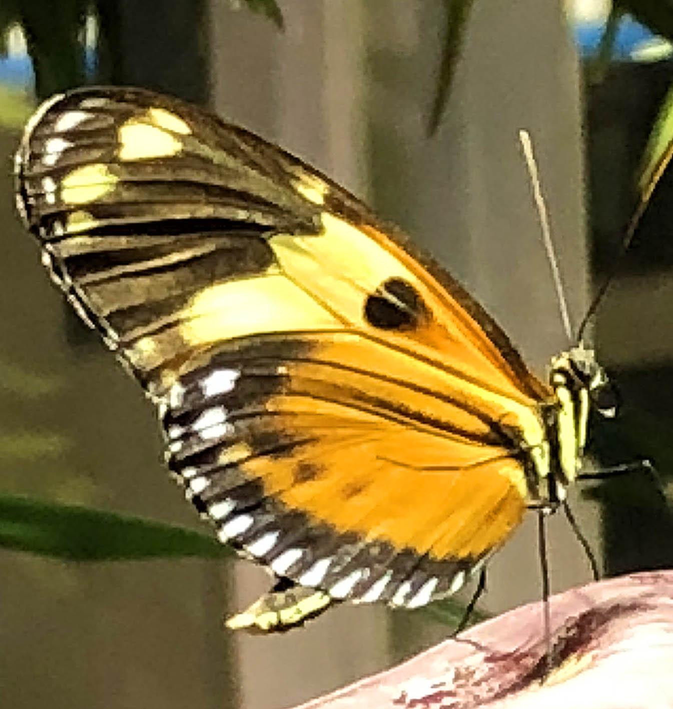 butterfly 5 67.jpg