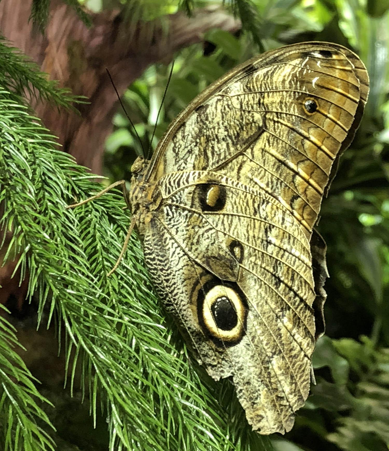 butterfly 7 72.jpg