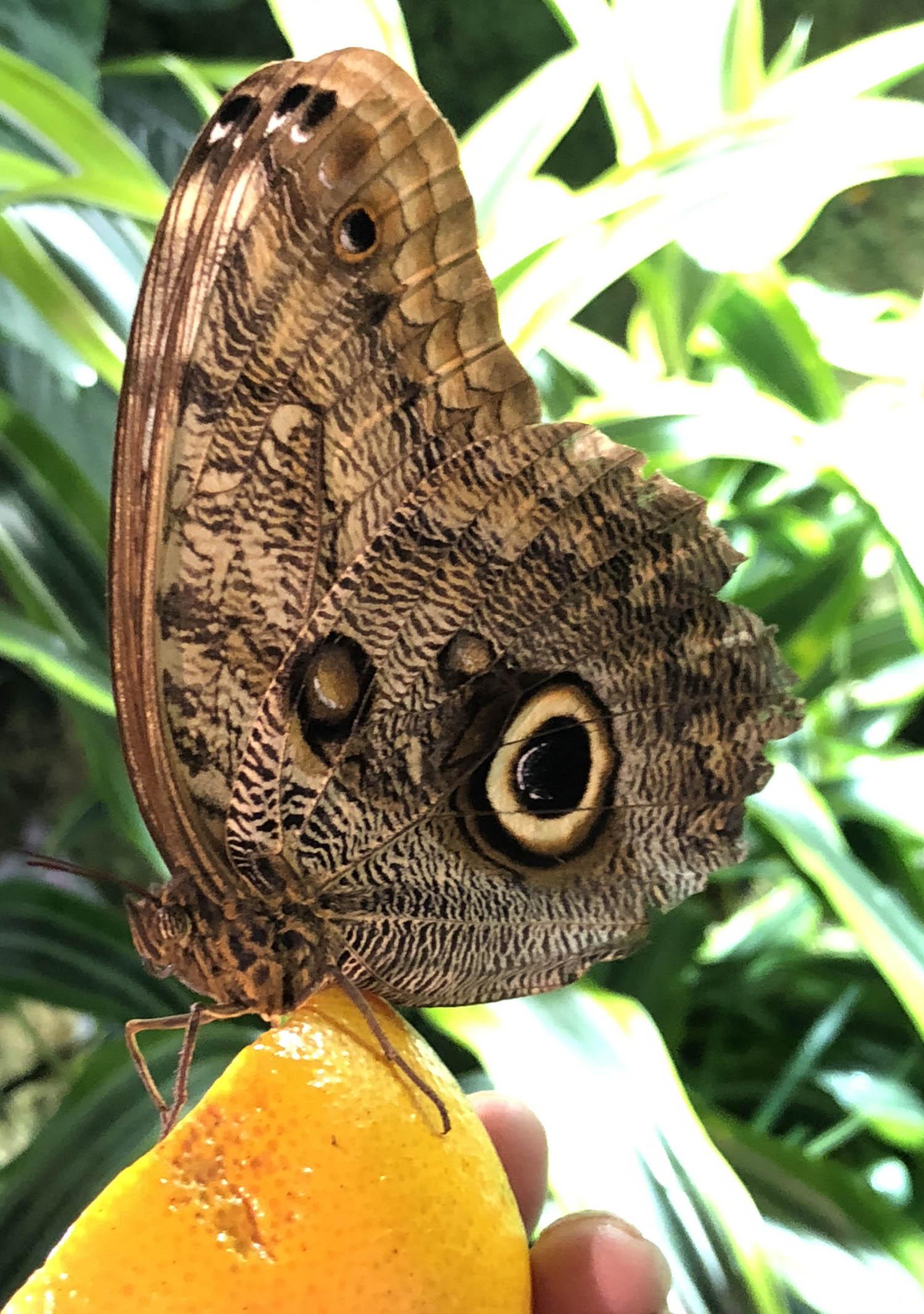 butterfly 10 81.jpg