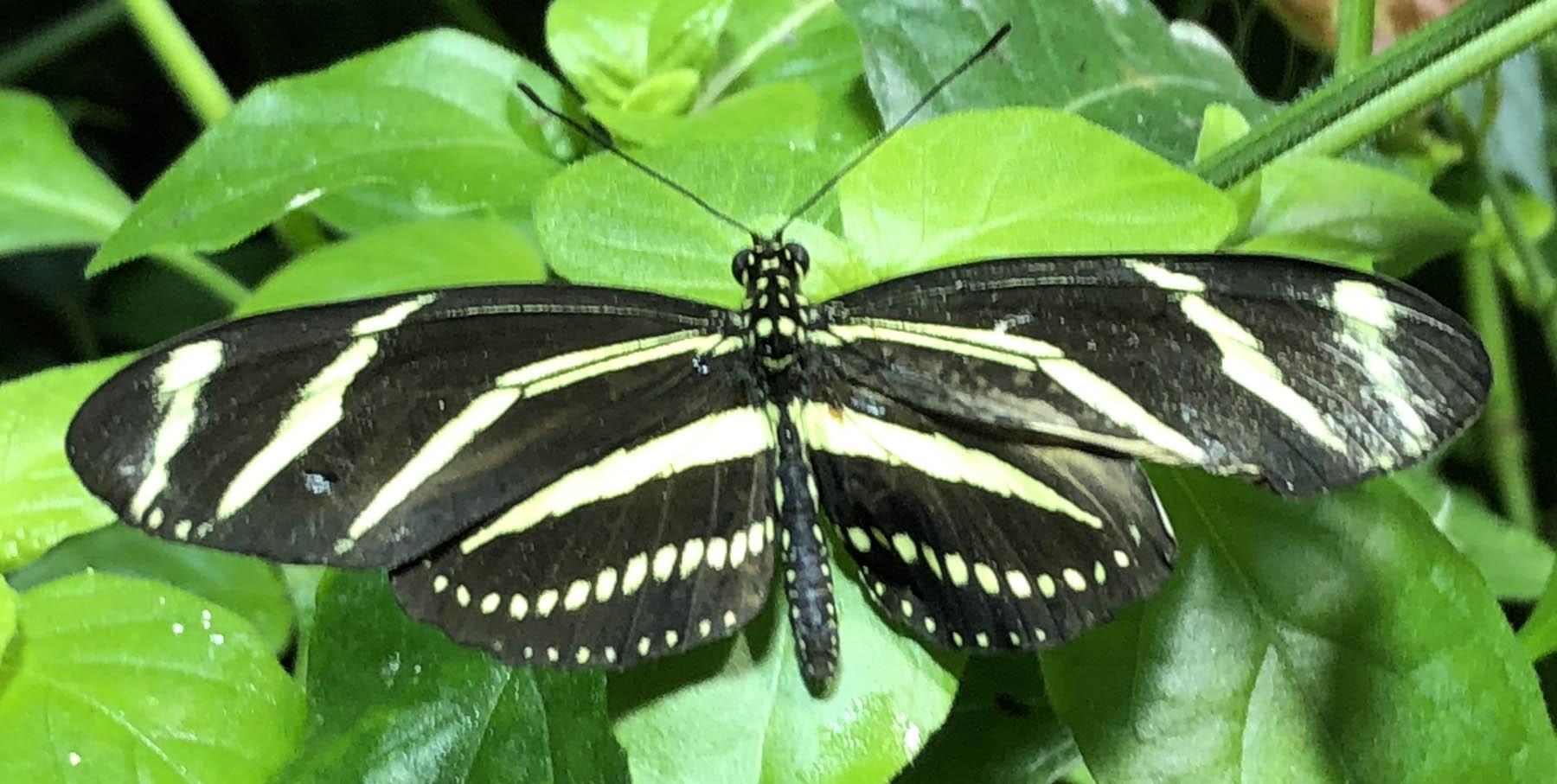 butterfly 8 74.jpg