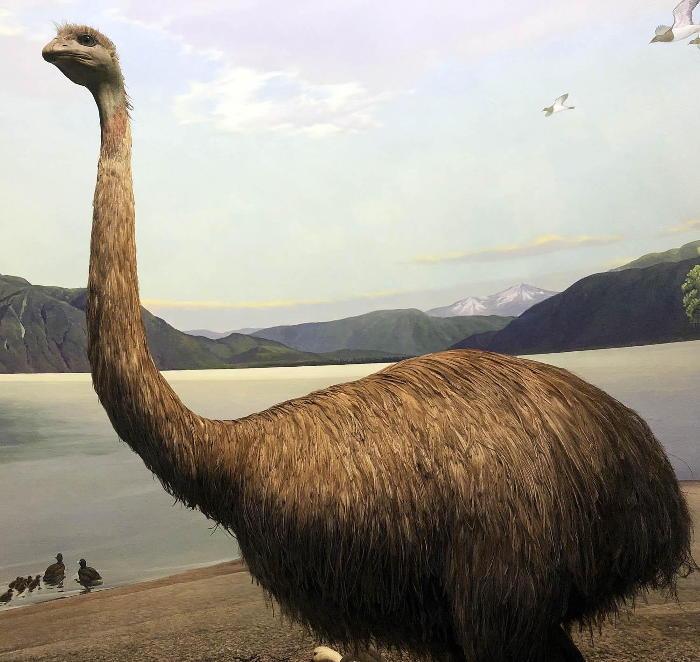 Ostrich 88.jpg