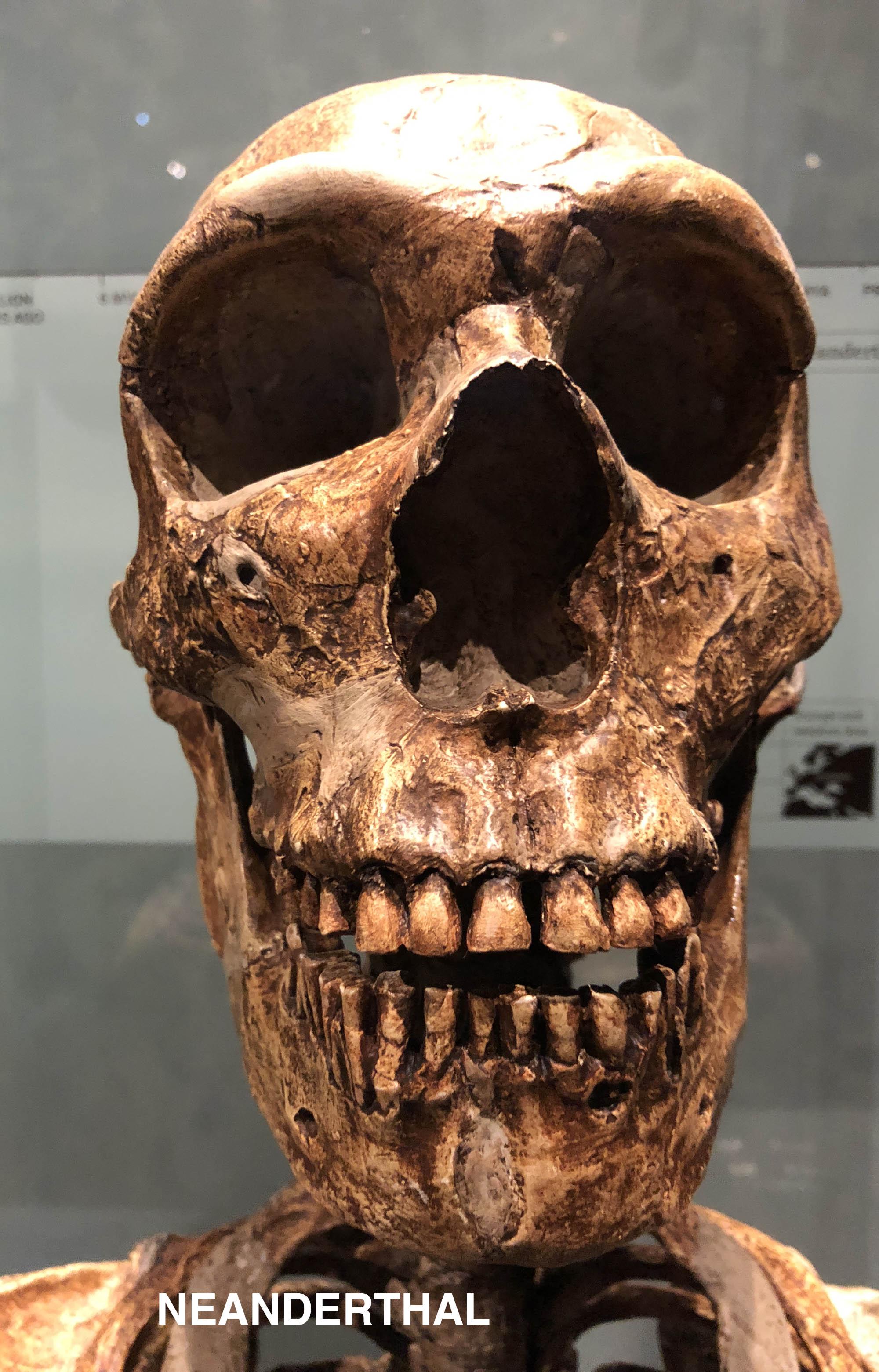 Neanderthal 92.jpg