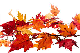 Fall Leaves.png