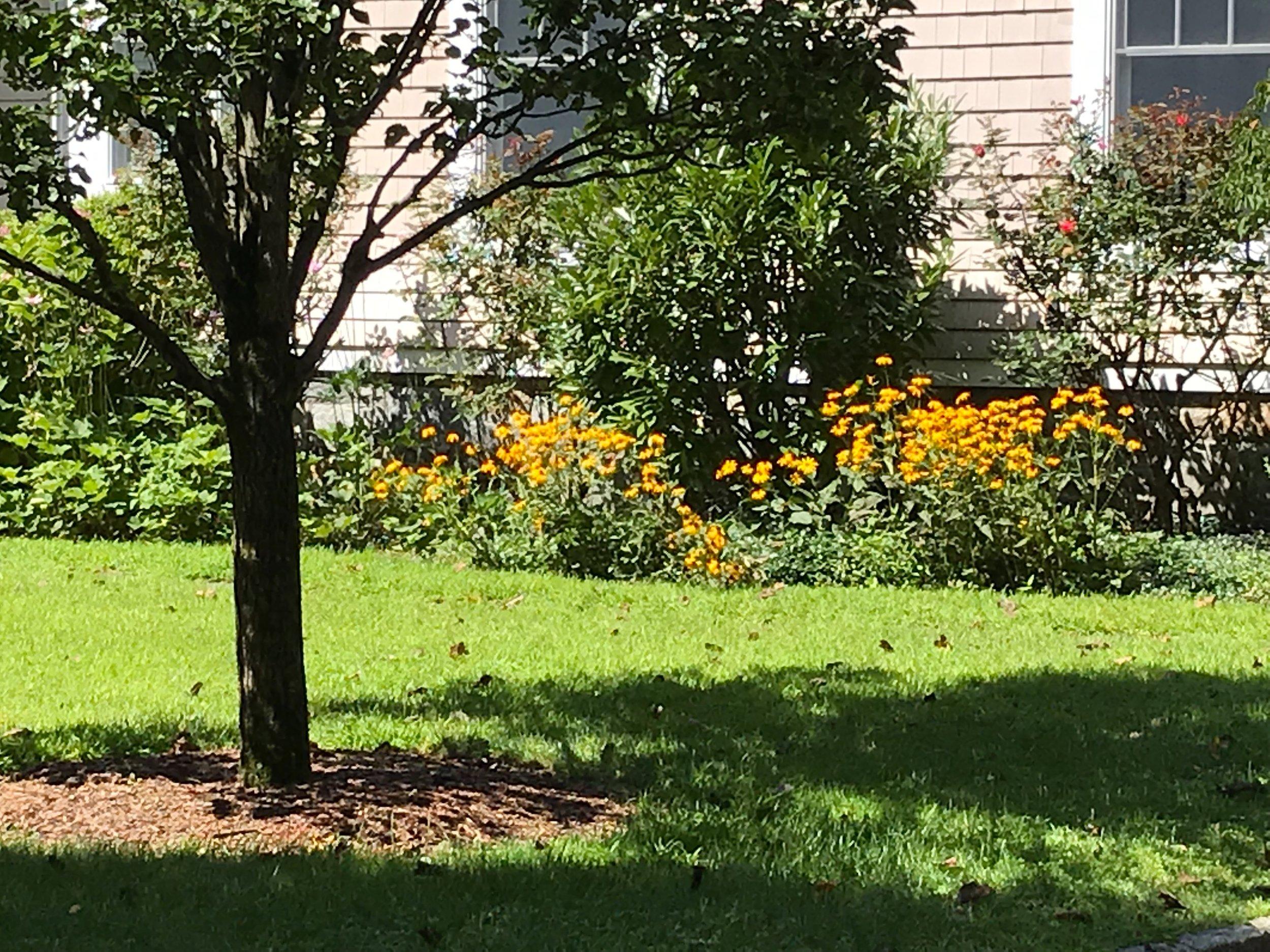 Flowerbed I.jpg