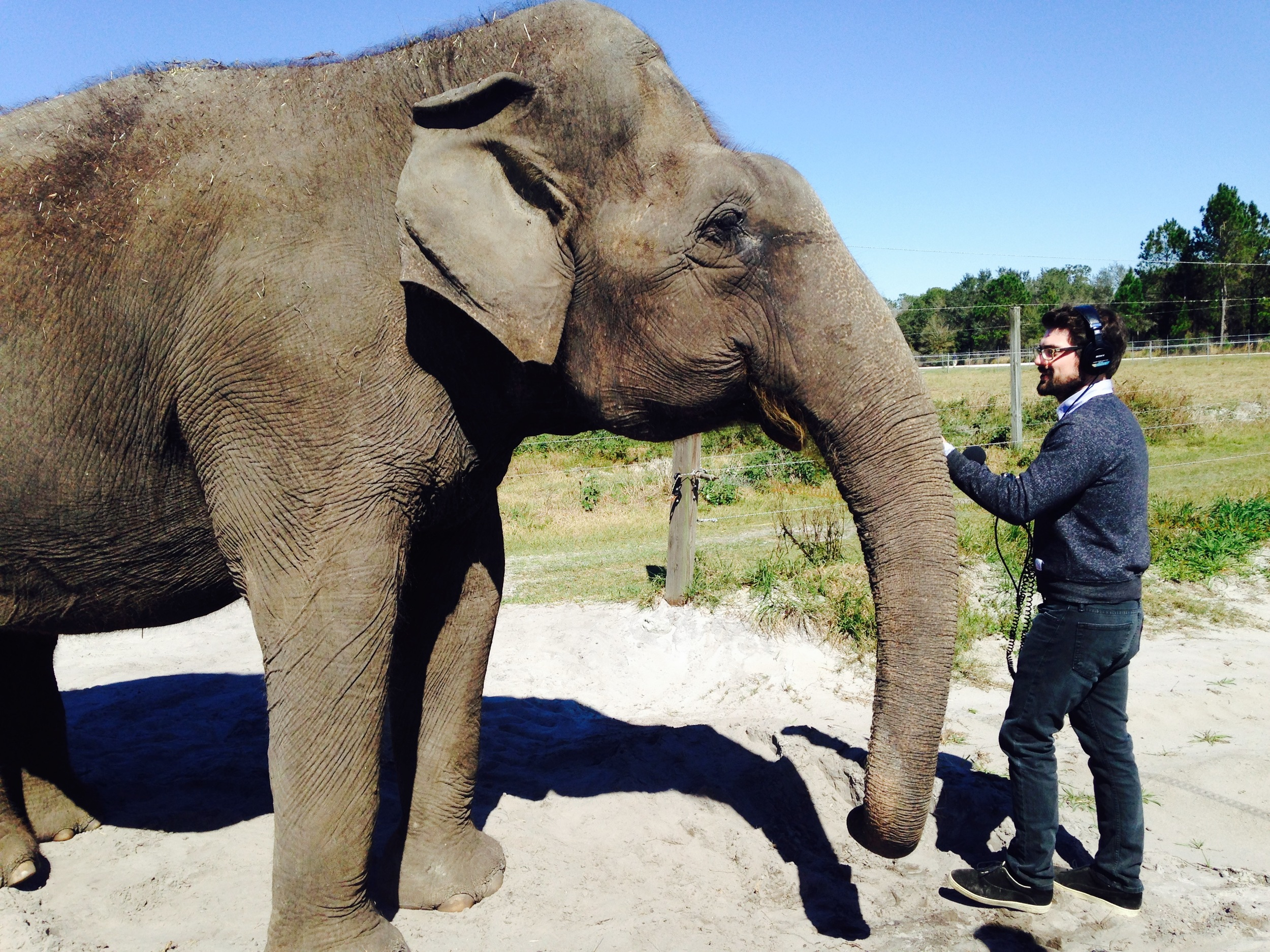 This is a picture of me with an elephant.