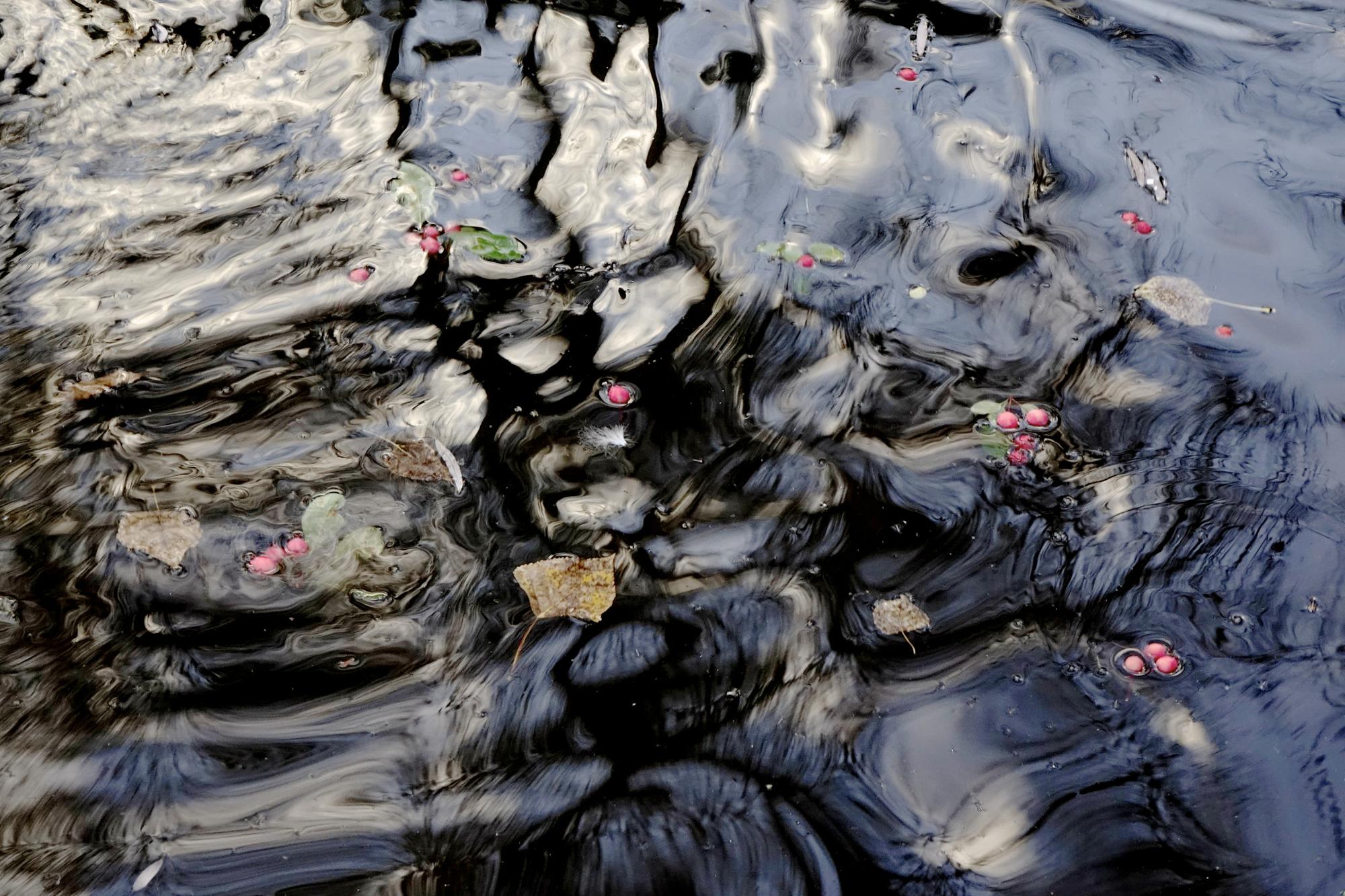 berries-in-black-water.jpg