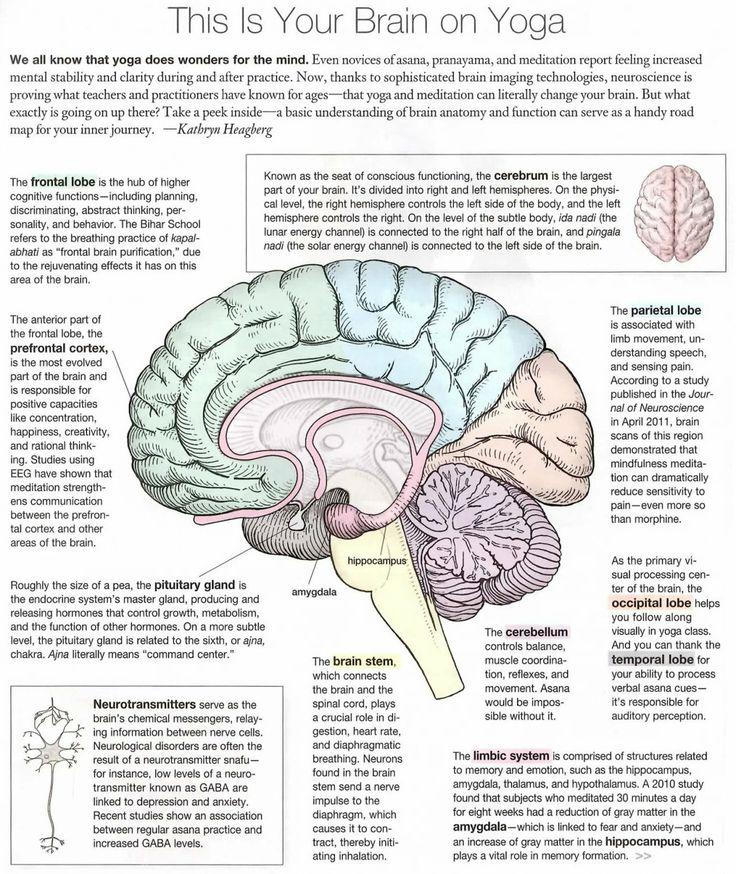 Your Brain on Yoga Rachelle Robinett