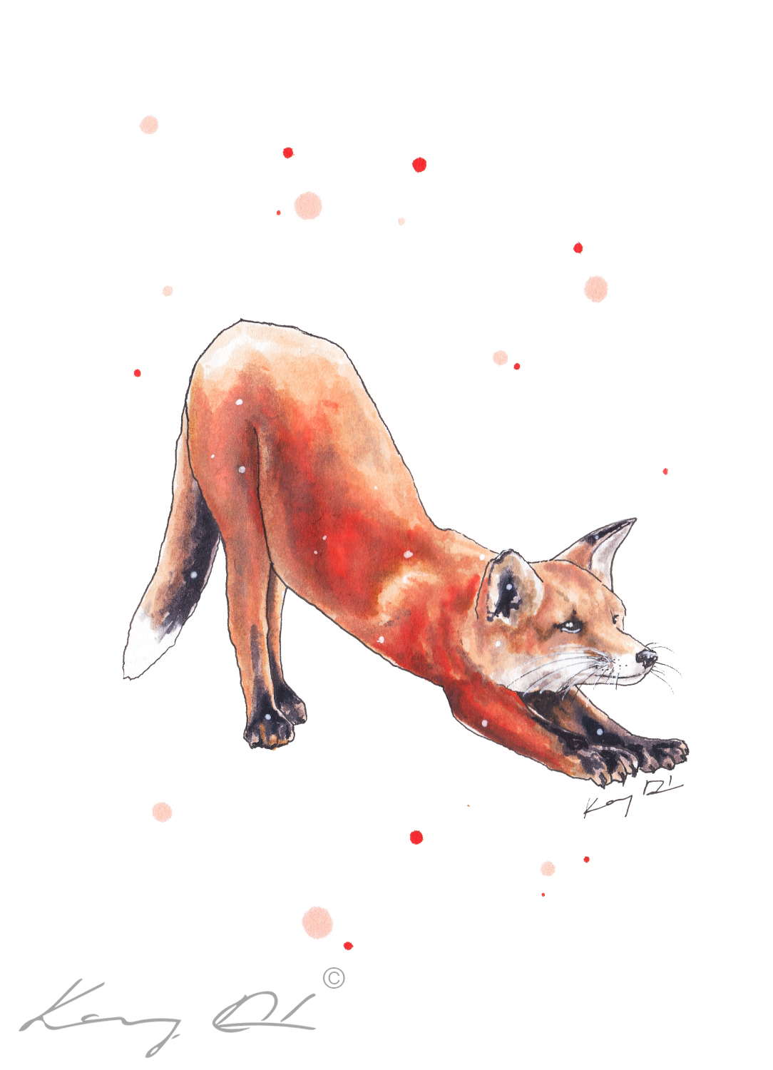 Stretching fox