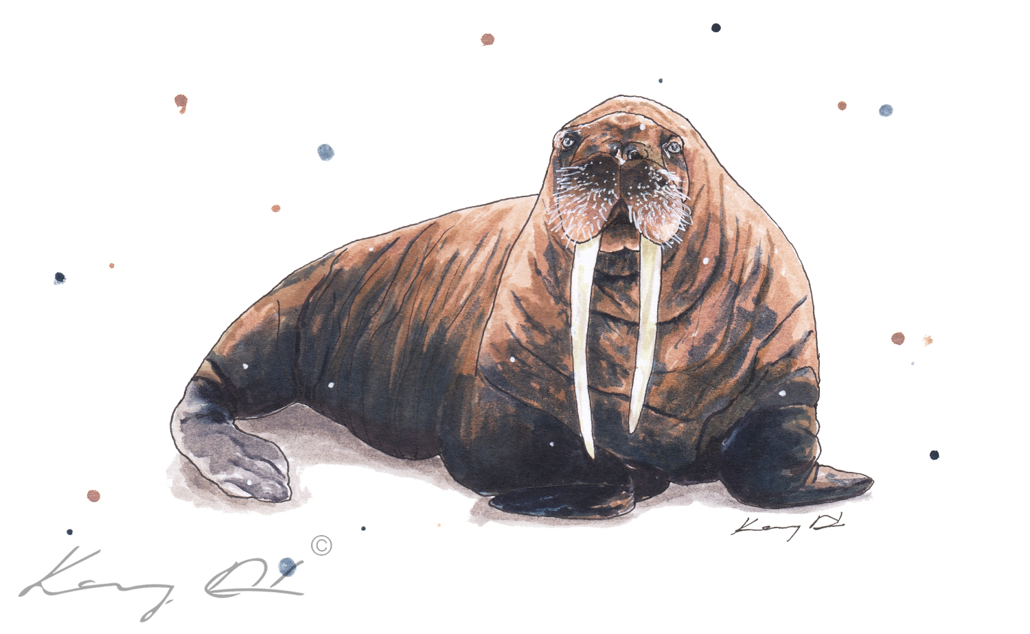 BP_18_037_Fat_Walrus_website.jpg