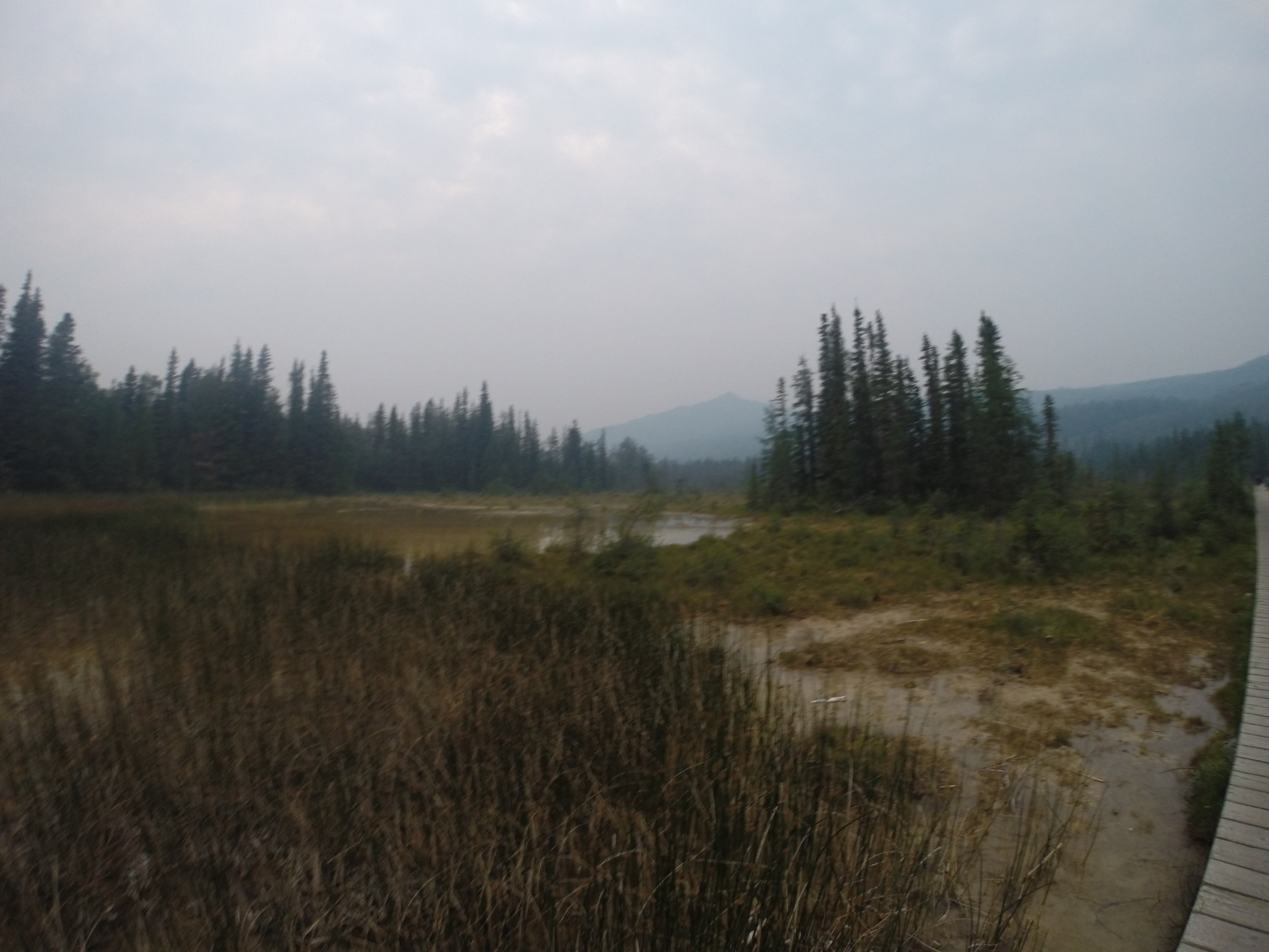 A view of the marshlands around Liard Hot Springs