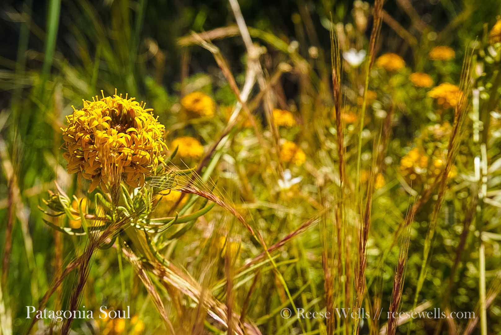 Wild Flowers - Because even wildFlowers like to have a placeThat they can call home.