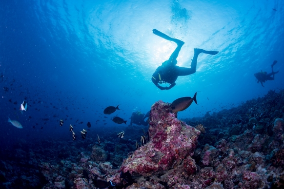 Discovery Diving in the Great Barrier Reef