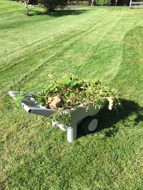 wagon of weeds.JPG