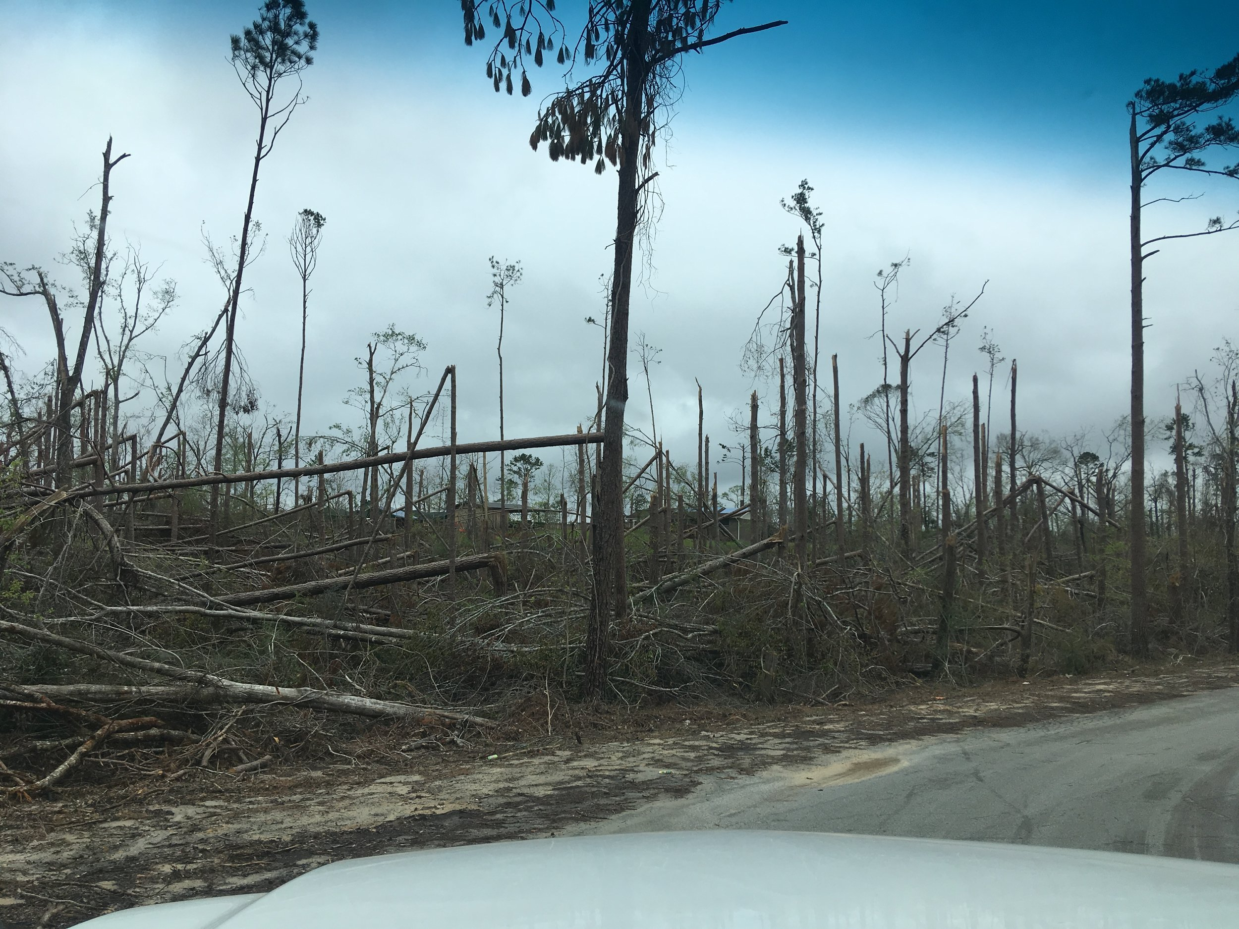 Another view of a forest devastated by Hurricane Michael.