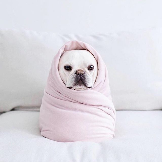 #selfcaresunday what are you doing just for you today? Thanks @iamwellandgood for this cutie