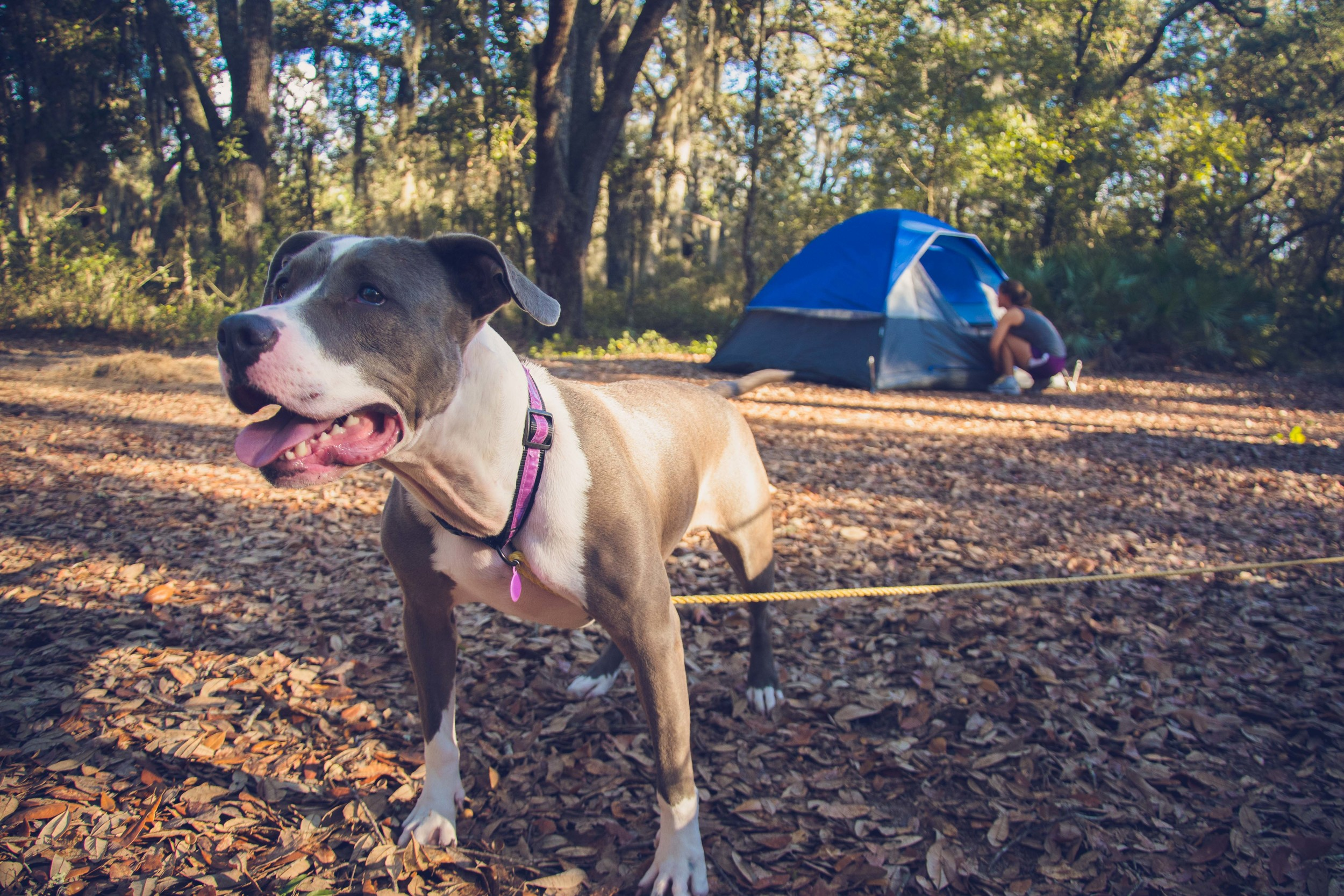 Camping with Joy-4.jpg