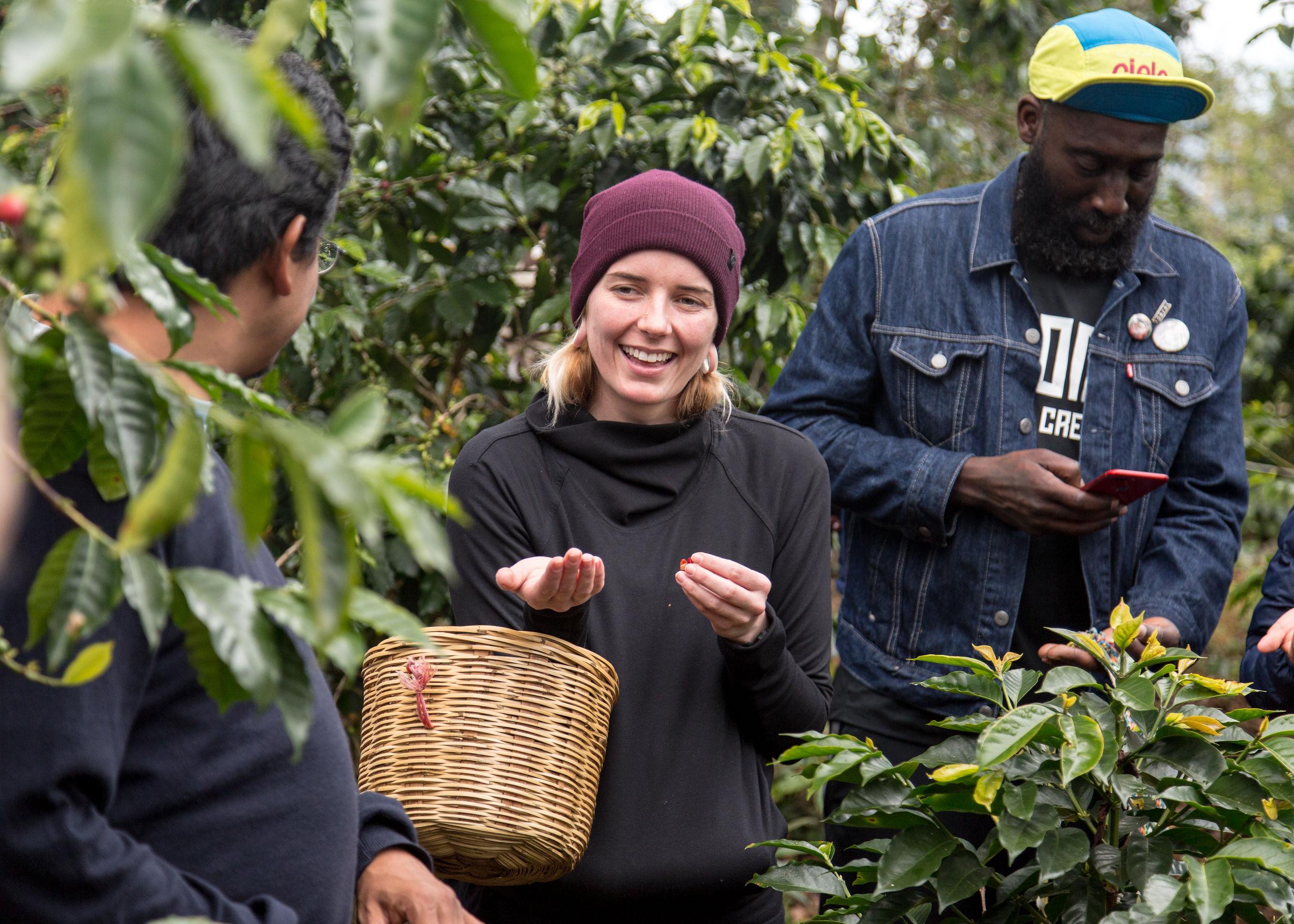 coffee berry picking. chiapas, mexico.