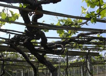 wines_lariveau_vineyard.jpg